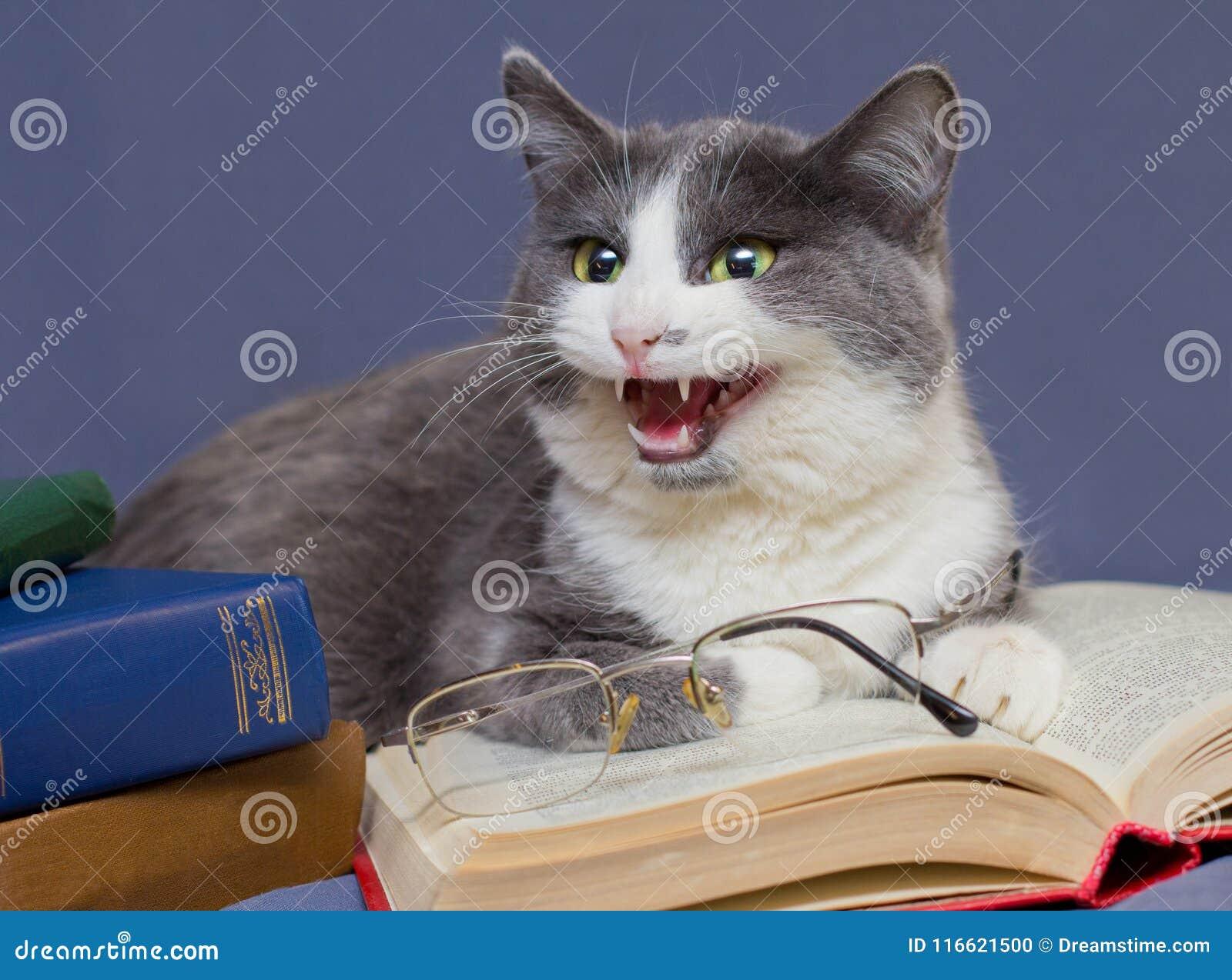 Grauer Katzelehrer täuscht die Schüler vor und entfernt Gläser