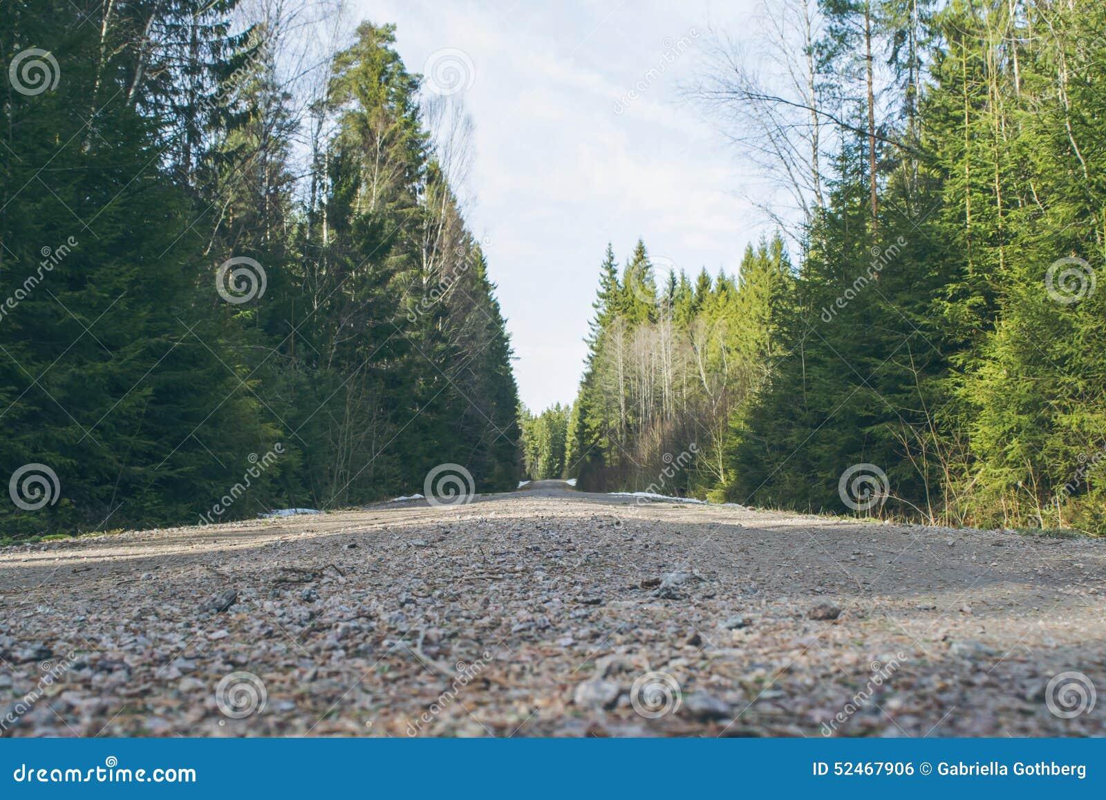 Gravel road in dense forest
