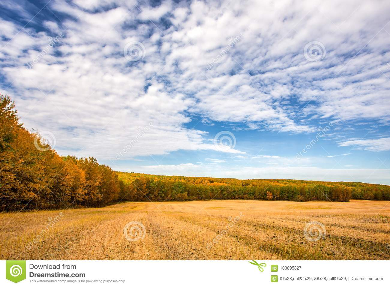 Download Agricultural Forested Countryside Autumn Landscape Stock Image    Image Of Lane, Agricultural: 103895827