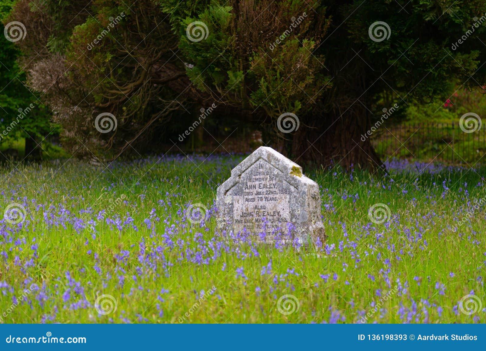 Gravestone in bluebells field