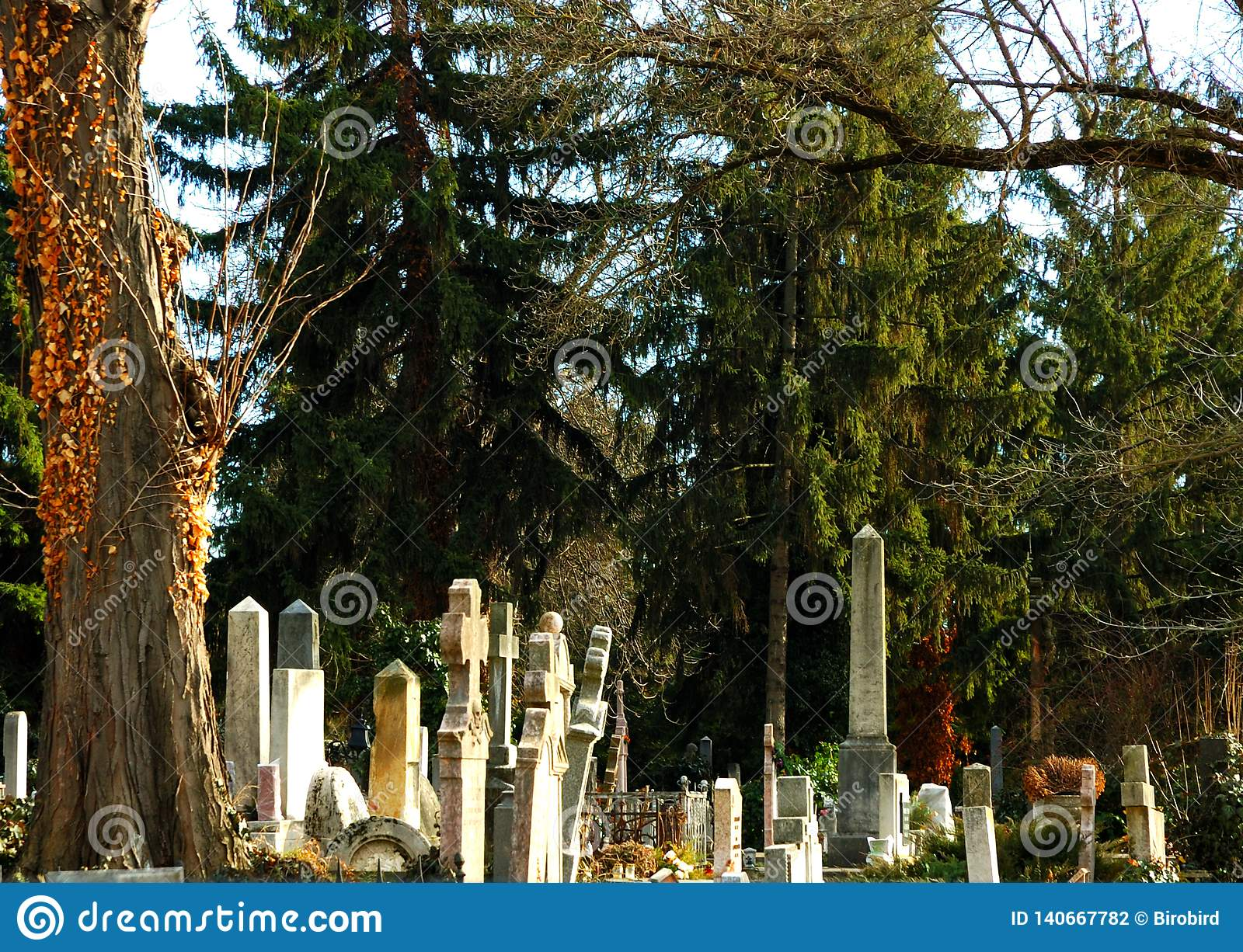 Gravestone in the pine`s shadow.