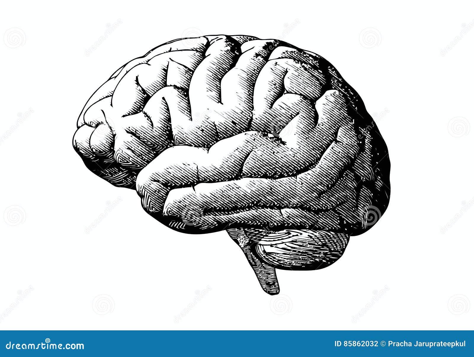 Gravyrhjärna med svart på vit BG