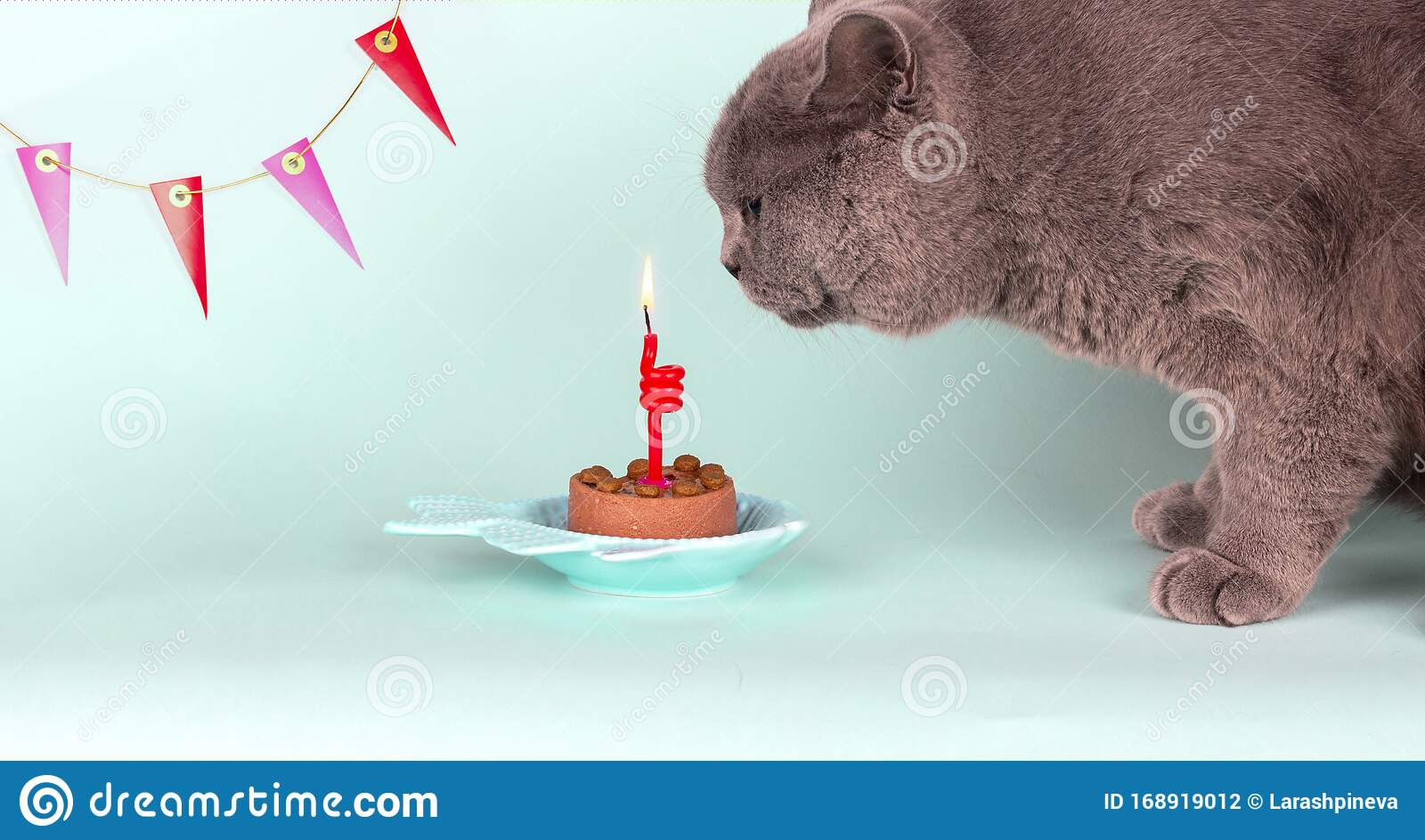 Pleasant Gray British Breed Cat Blows Out Candle On Cake On Light Blue Funny Birthday Cards Online Ioscodamsfinfo
