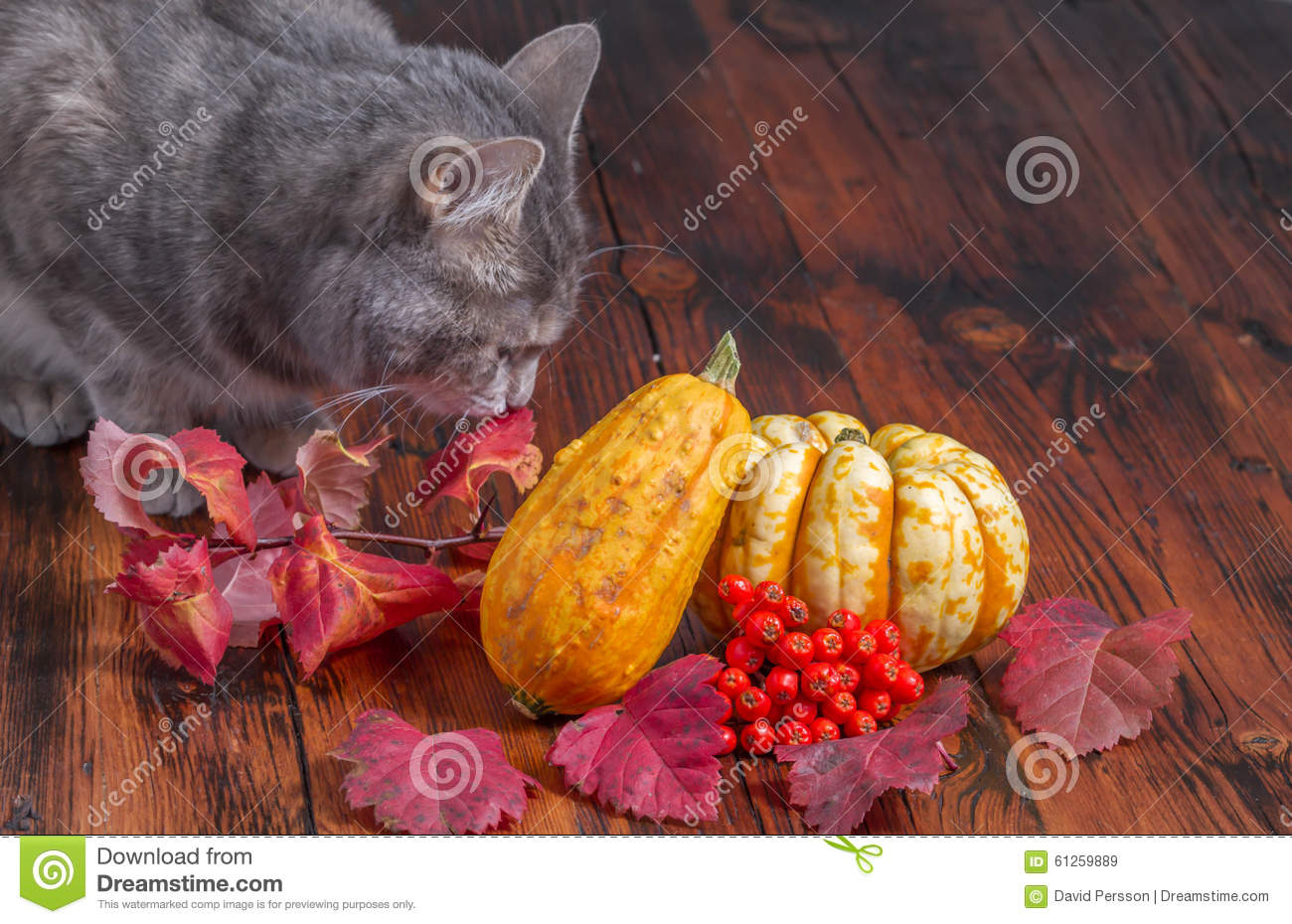 Gray Cat Inspecting This Years Halloween Decorations Stock - This Years Halloween