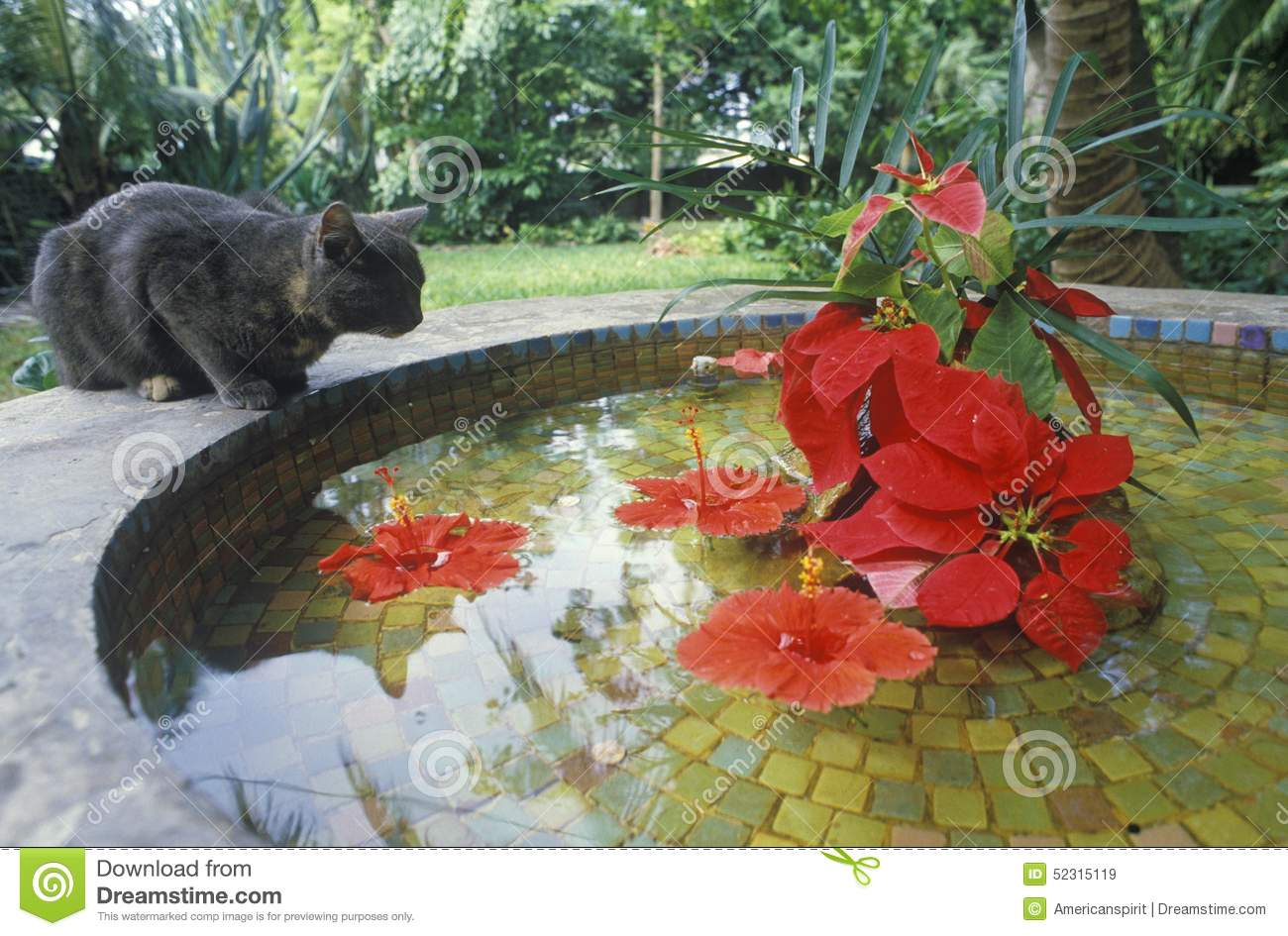 Gray Cat By Lily Pond In Key West Fl Home Of Ernest Hemingway Stock