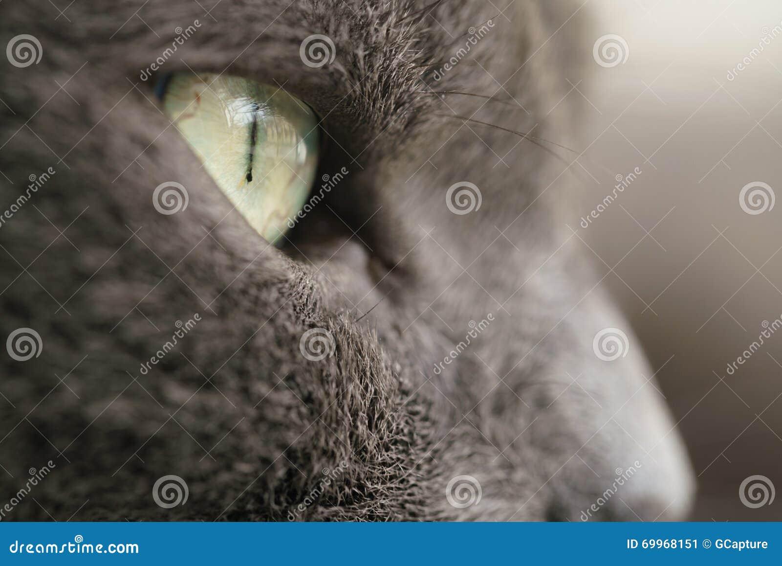 Gray cat portrait close up photo