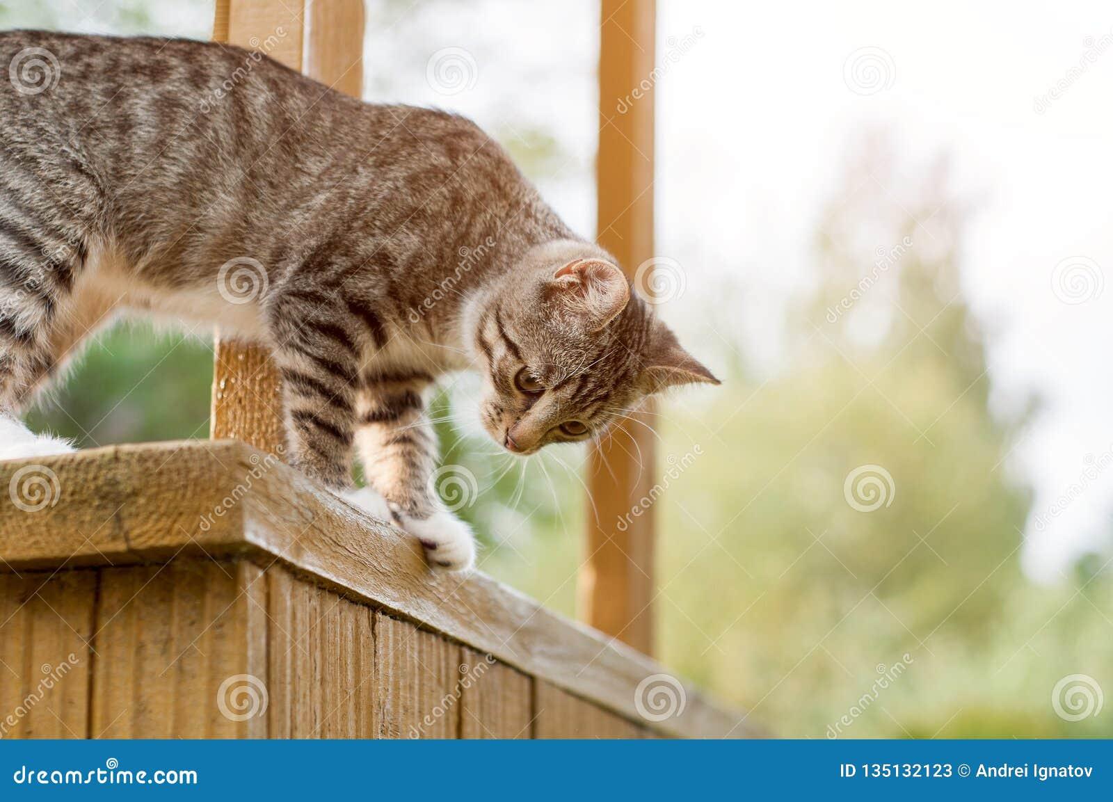 Gray Cat Sit On Porch Sideview van Gray Cat Sitting On Wooden Stoop en neer het Kijken