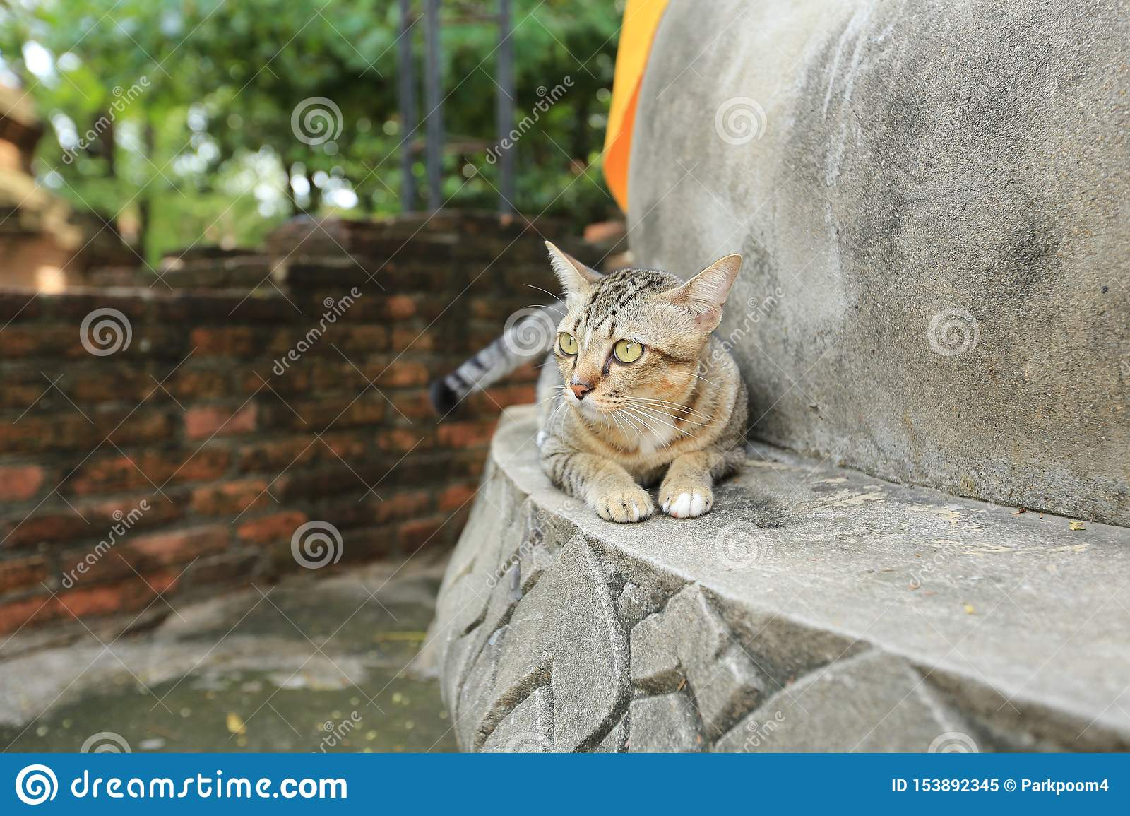 Gray cat with yellow eyes in temple