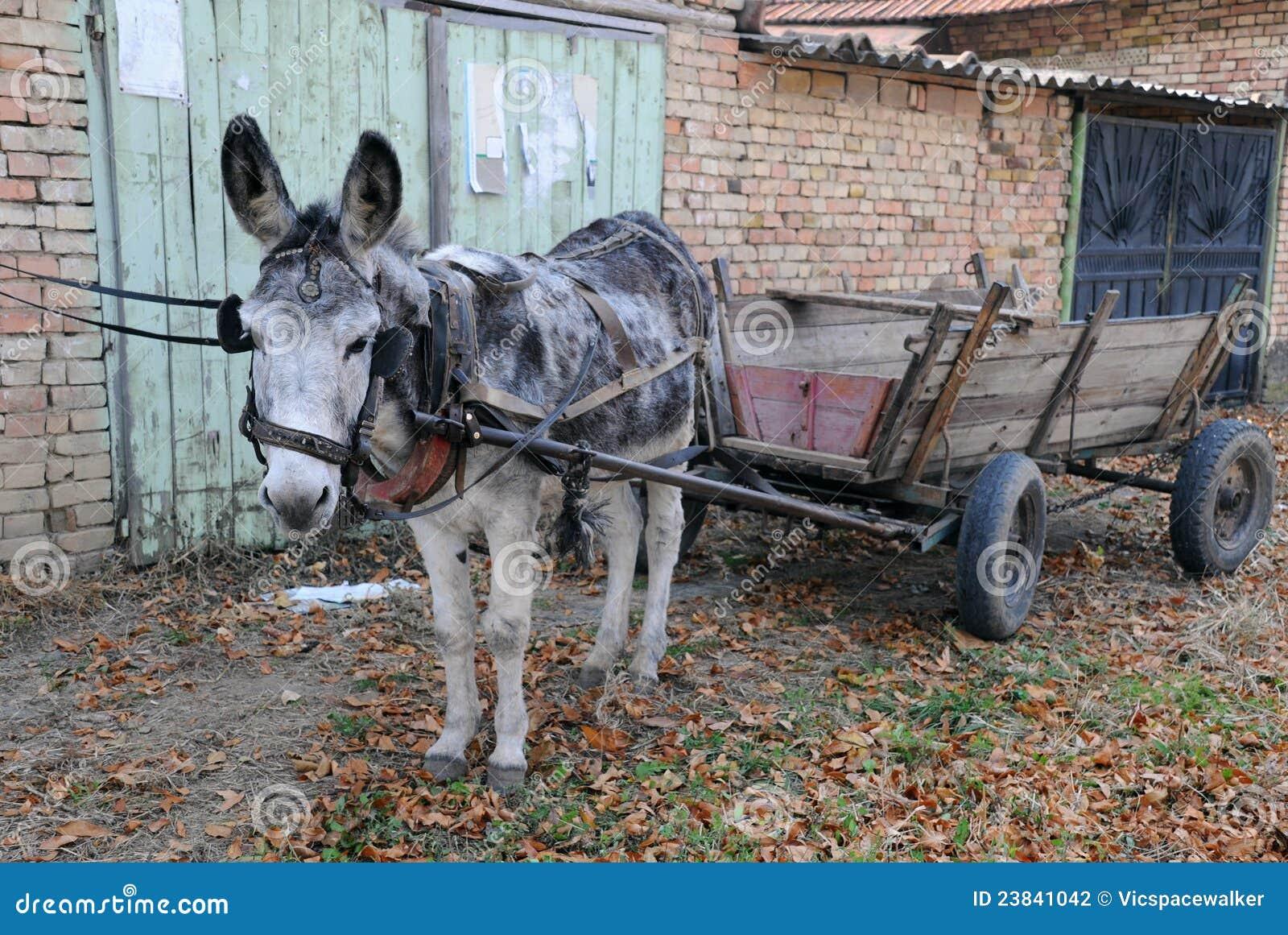 Gray Donkey And Empty Cart Stock Photography Image 23841042
