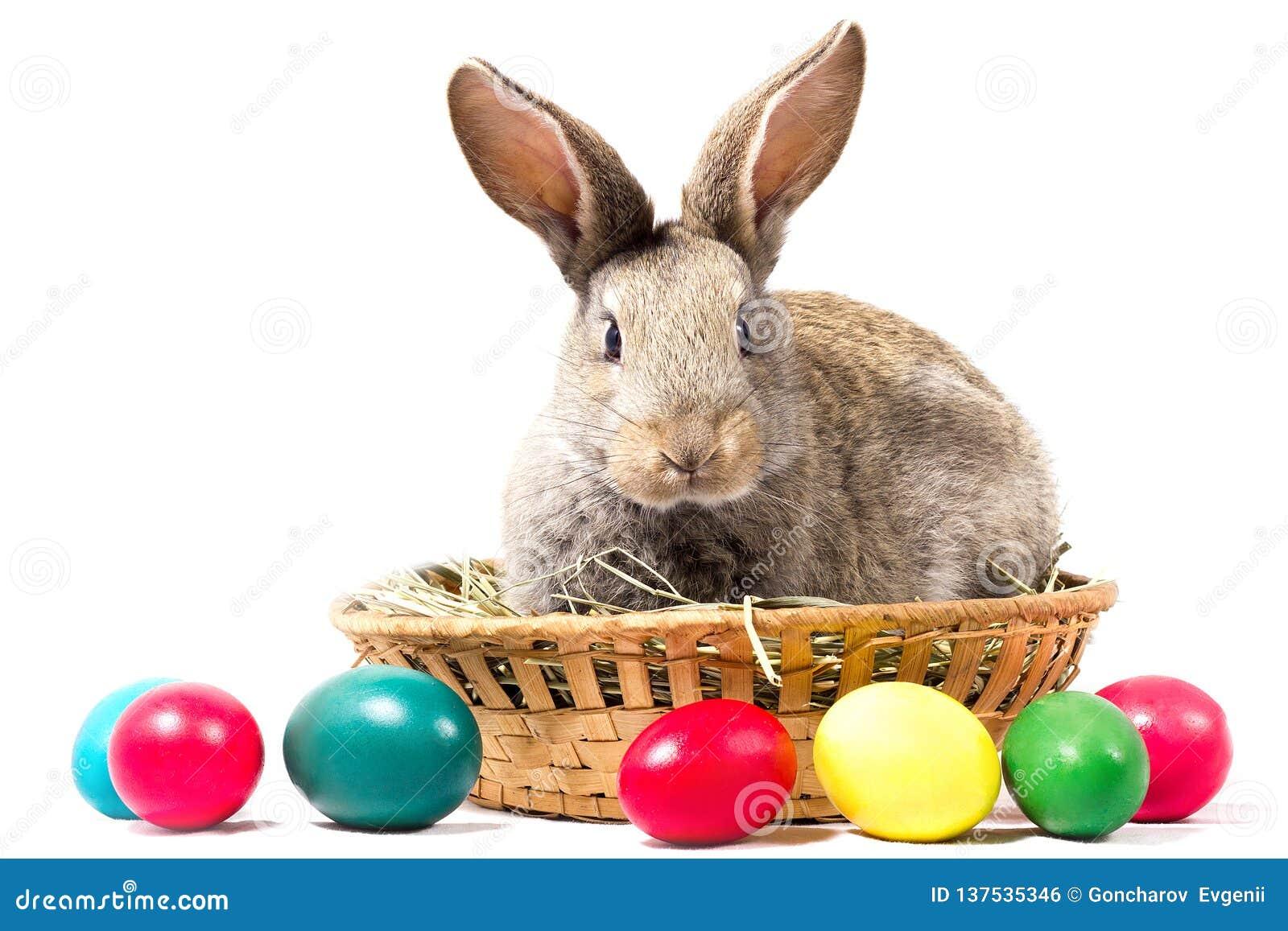 Gray Easter Bunny Sits In een Mand, isoleert, Spatie voor Pasen-Vakantie