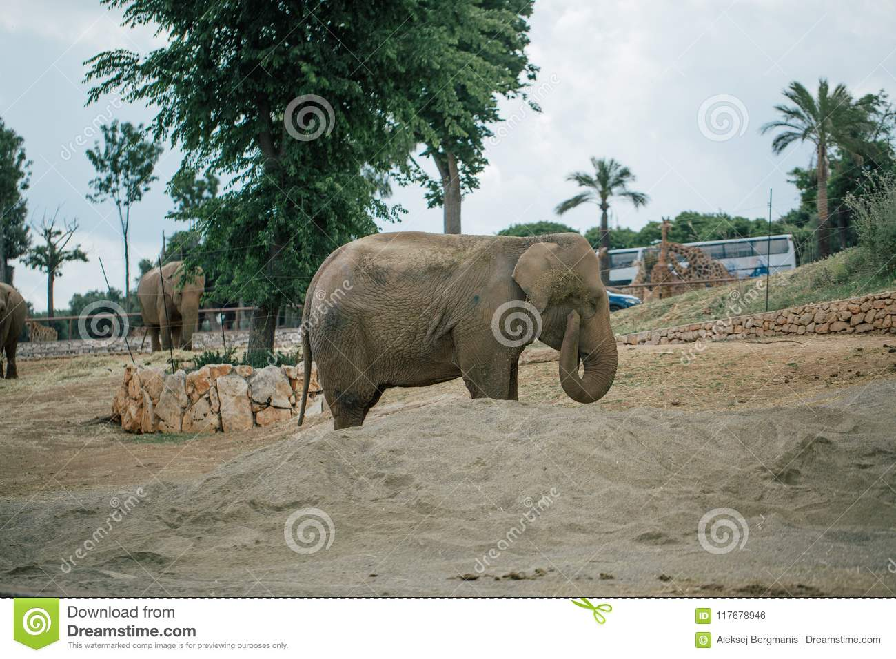 Elephant in Safari zoo Fasano apulia Italy