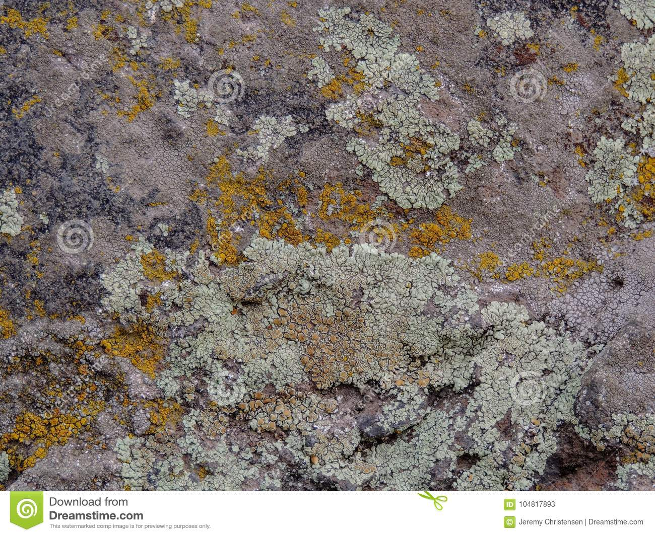 Gray, Green, Black, Lichen on rock, symbiotic combination of a fungus with an algae or bacterium, close up, macro in fall on the Y