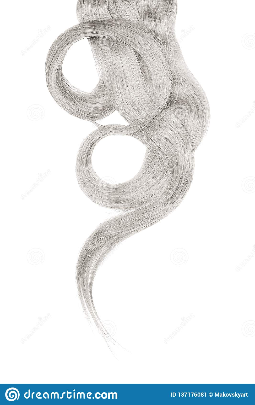 Gray hair isolated on white background. Long beautiful ponytail in shape of circle