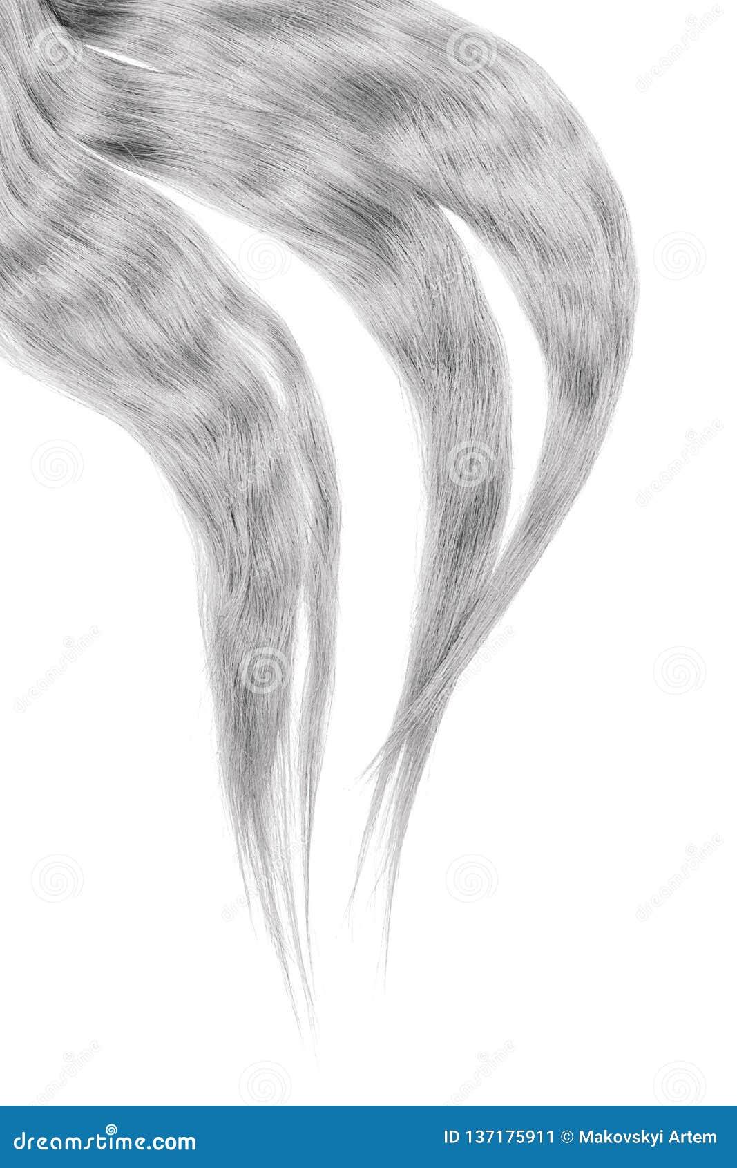 Gray hair isolated on white background. Long disheveled ponytail