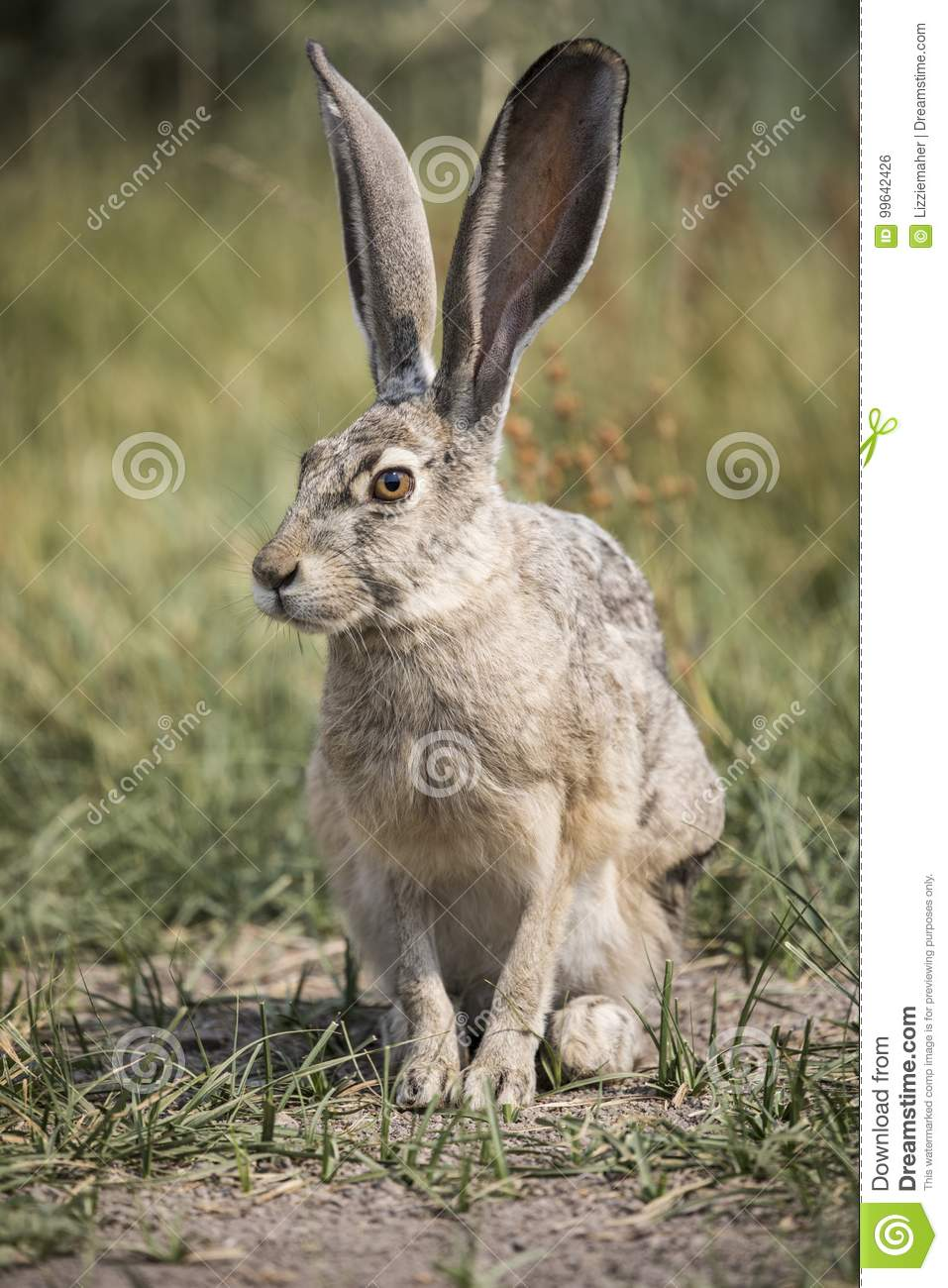 hare download