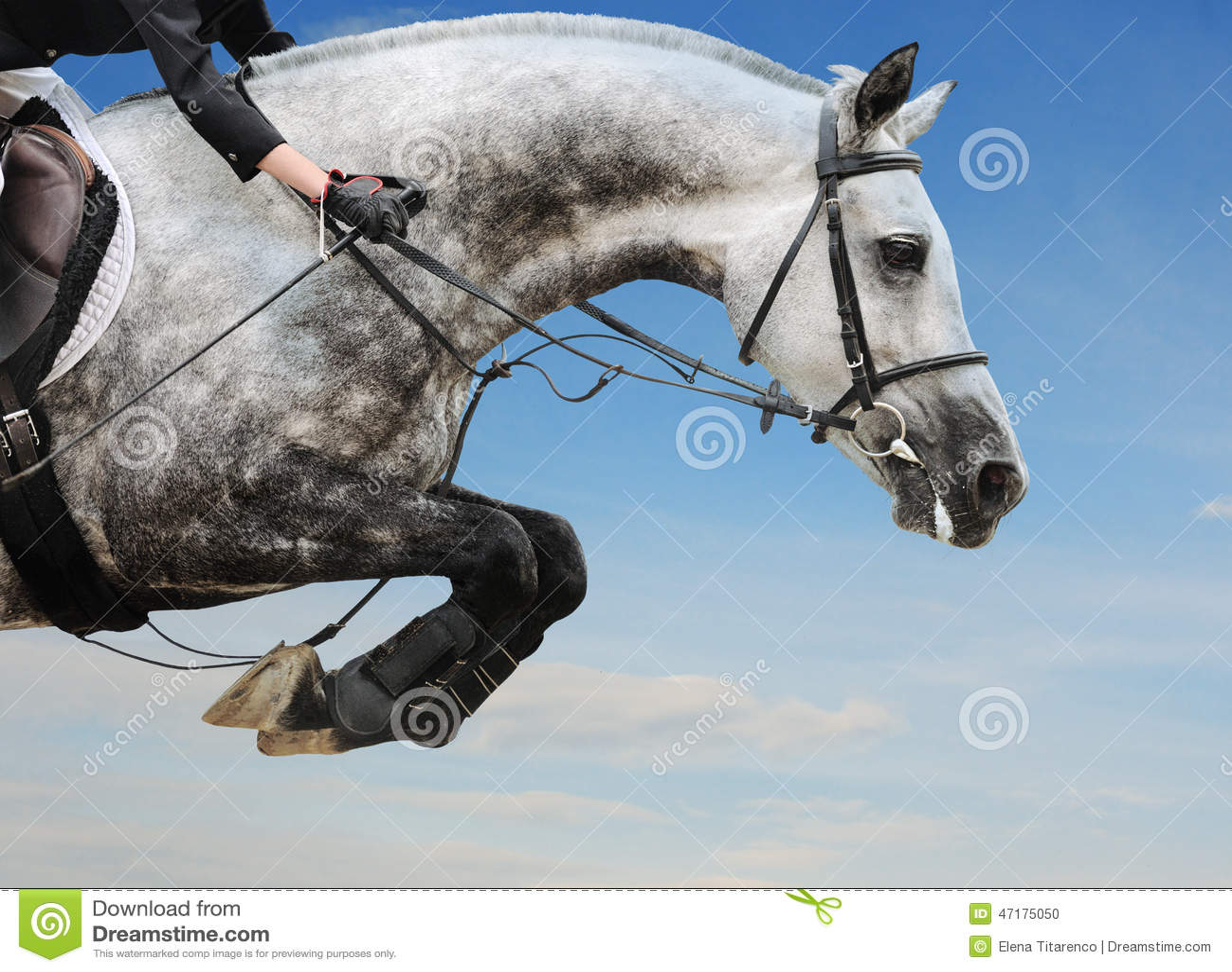 Horse jumping vector