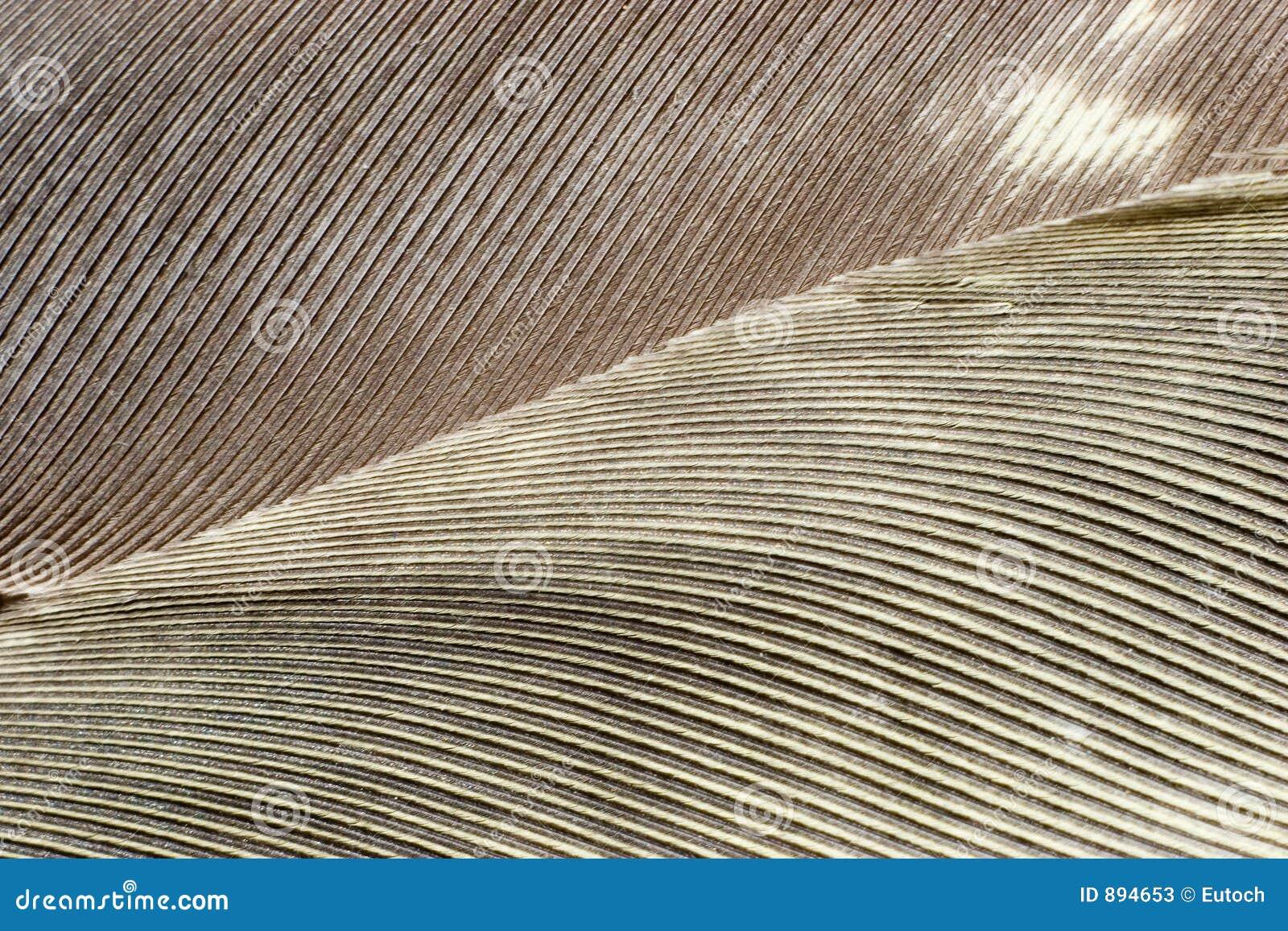 Gray piórkowe tło