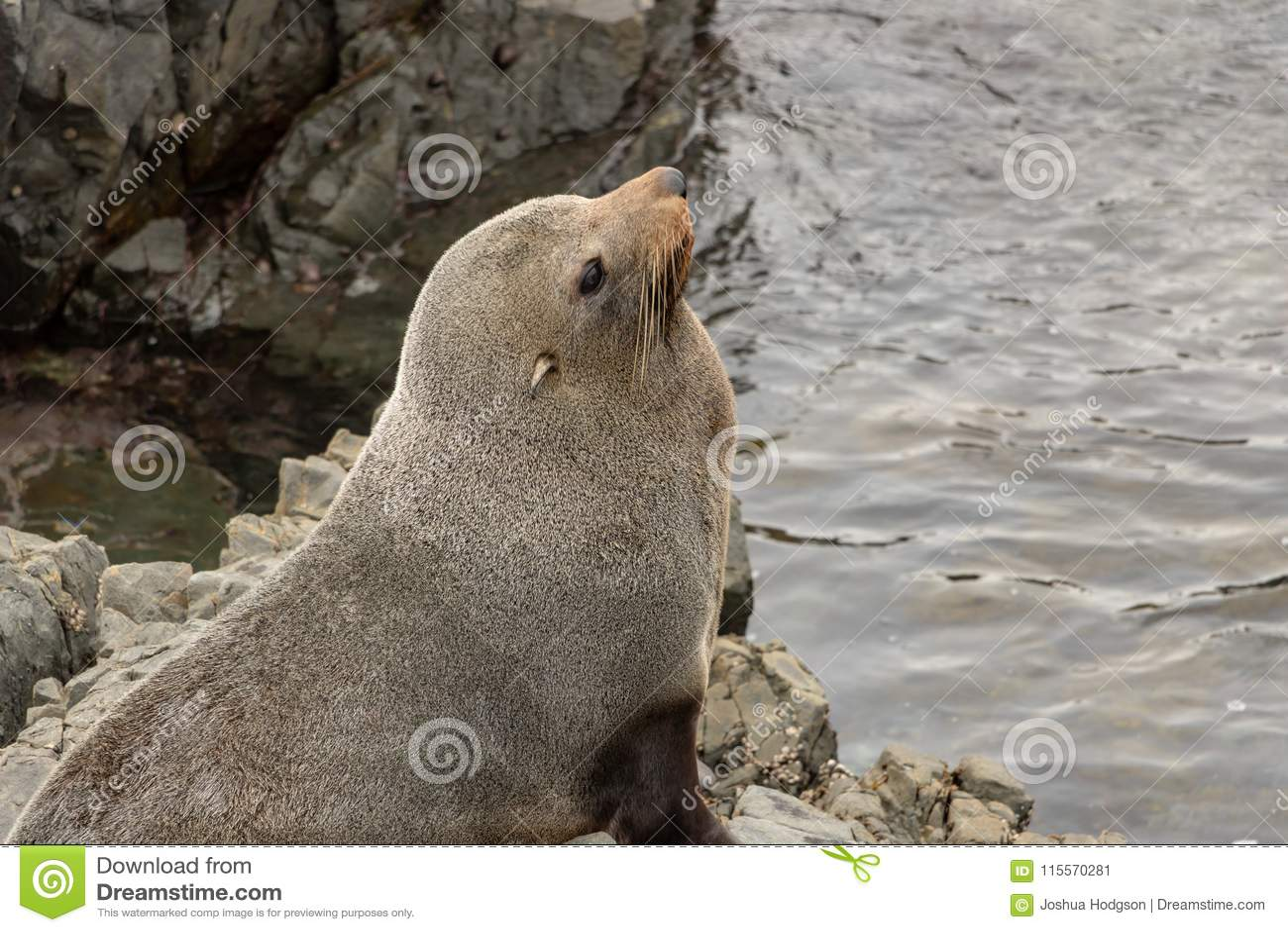Gray Seal On Rock