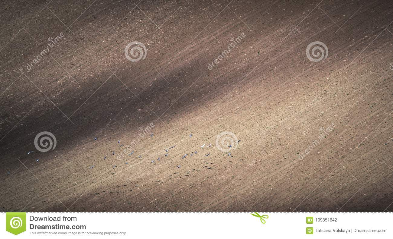 Gray spring field abstract background