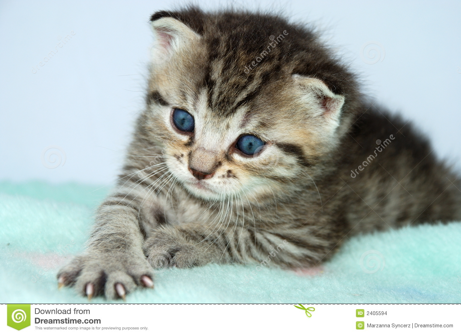 baby kitten wallpaper free