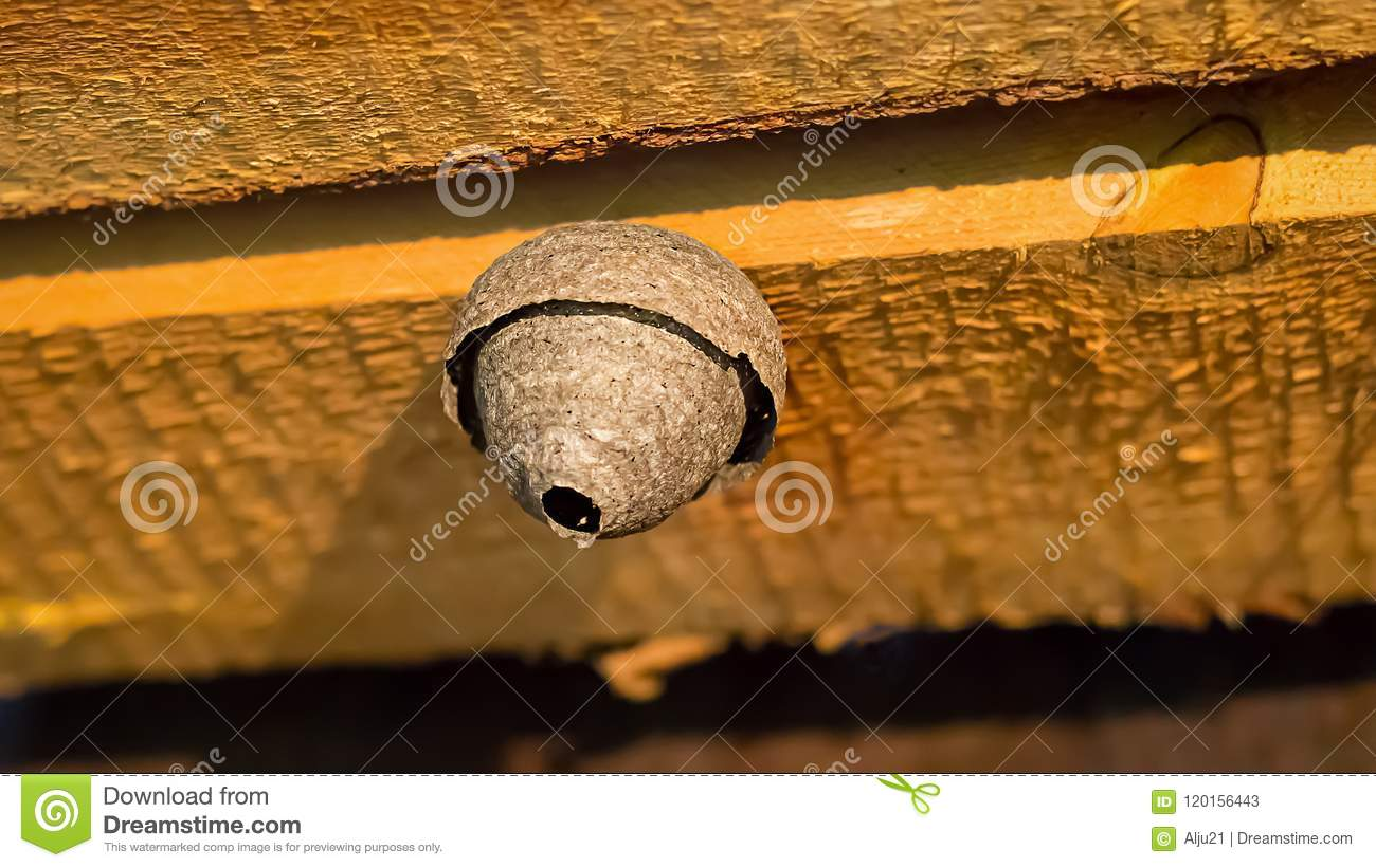 Gray Wasp Nest On Wooden Beam. Beehive On Attic. Selective ...