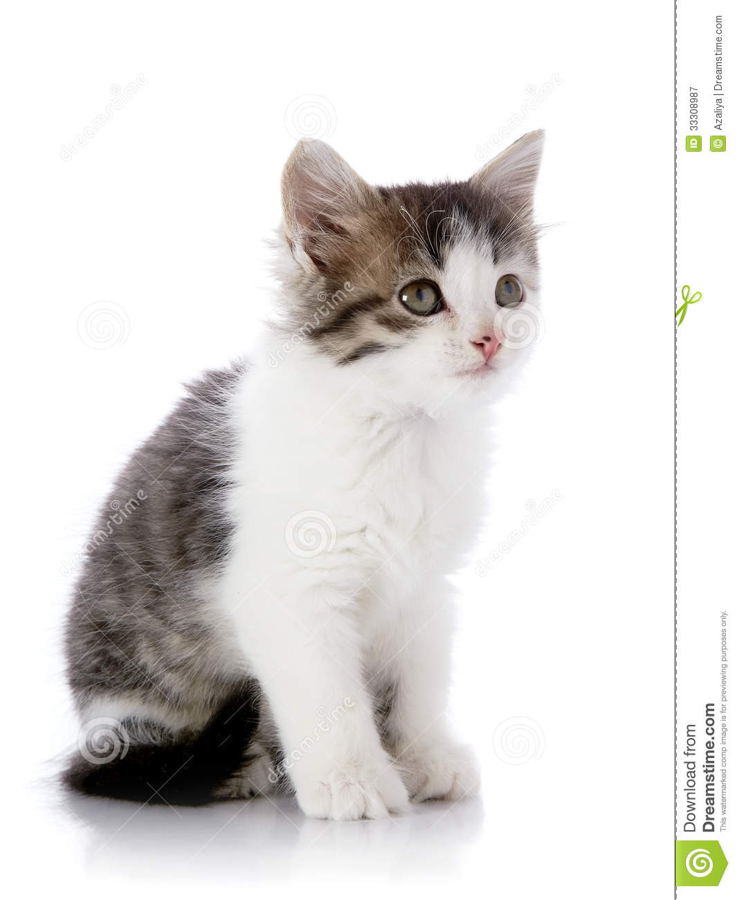 Cute Names For Silver Cats