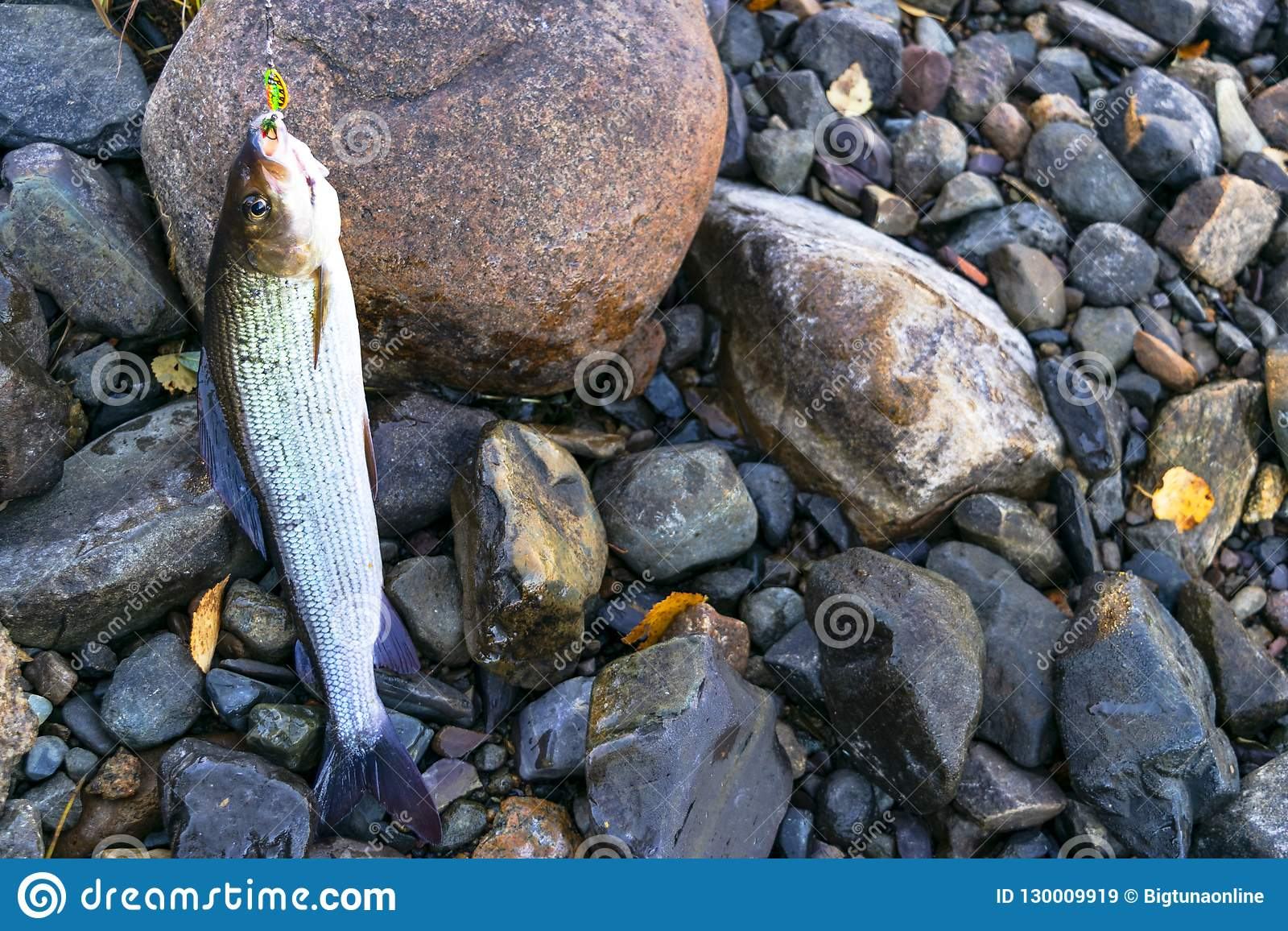 f4db71efe677d Fly Fishing Stock Images - Download 19