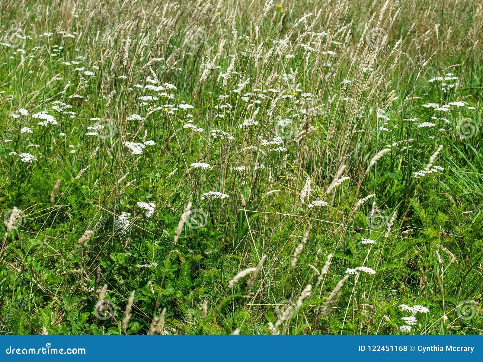 Grayson Highlands Meadow