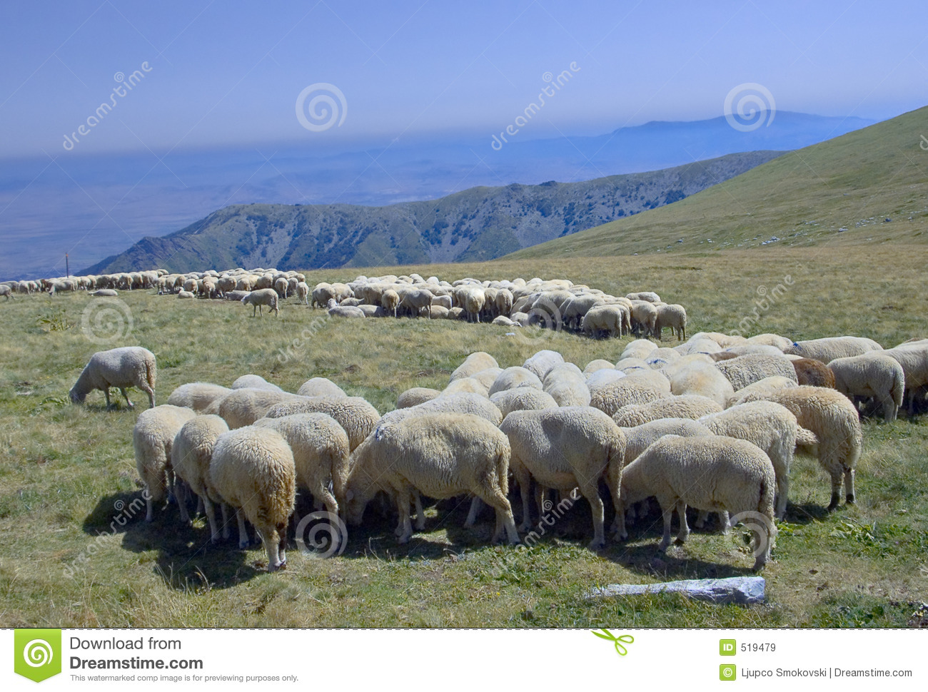 Grazelandflockmacedonia sheeps