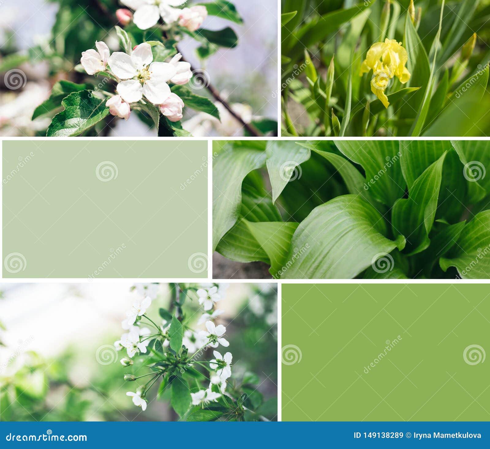 Grean v?xter med blommacollage