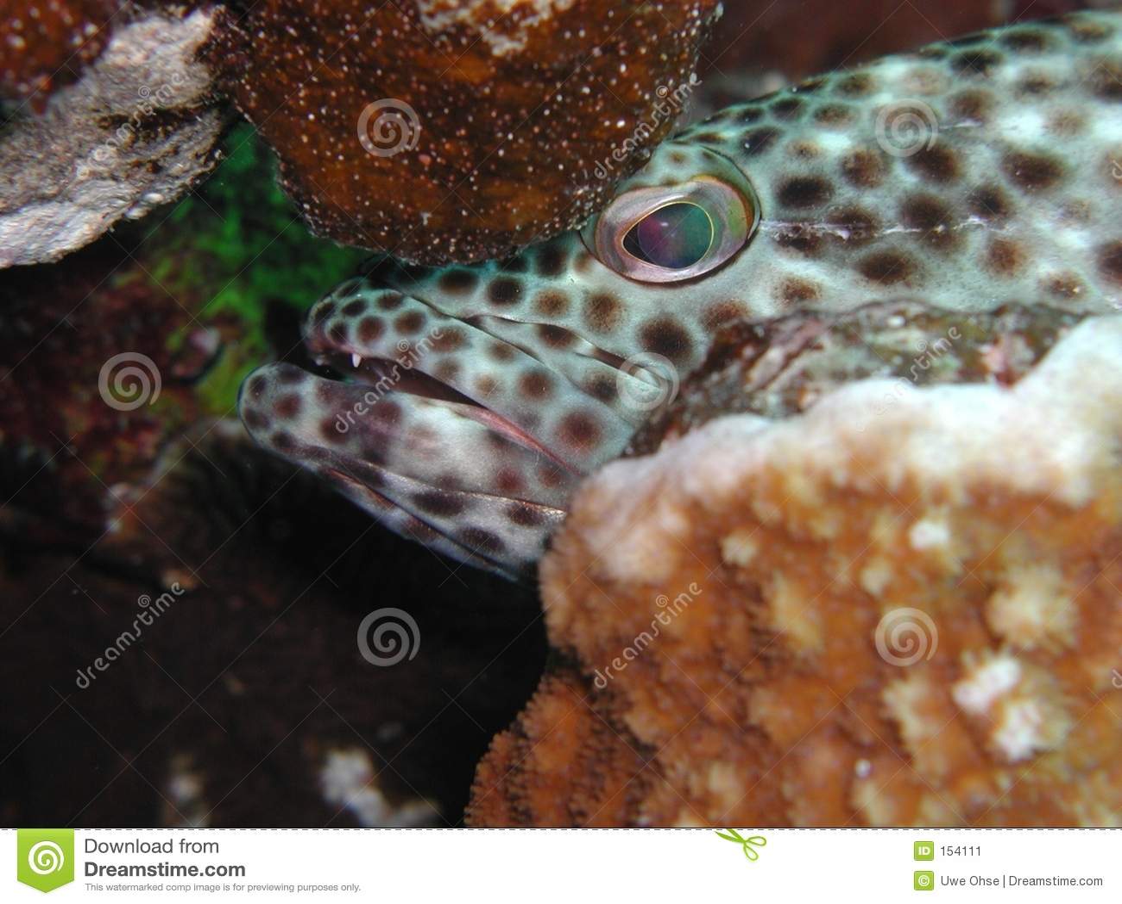 Greasy Grouper 2