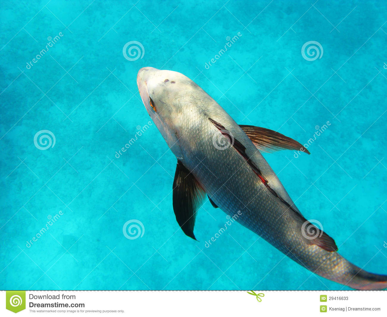 Great barrier reef big fish in the water stock image for Dream about fish out of water