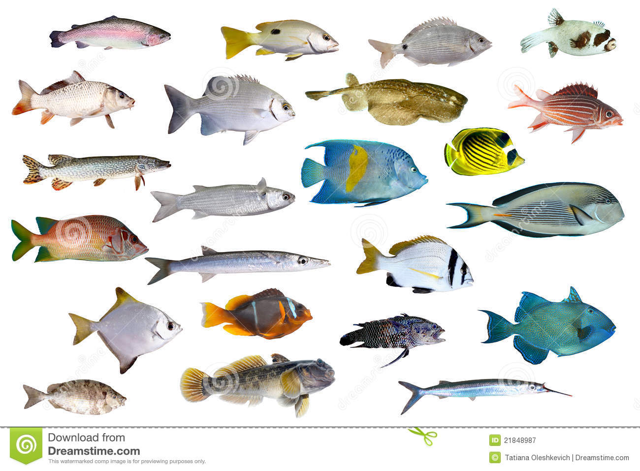 Great collection of a tropical fish on a white stock image for Photos of fish