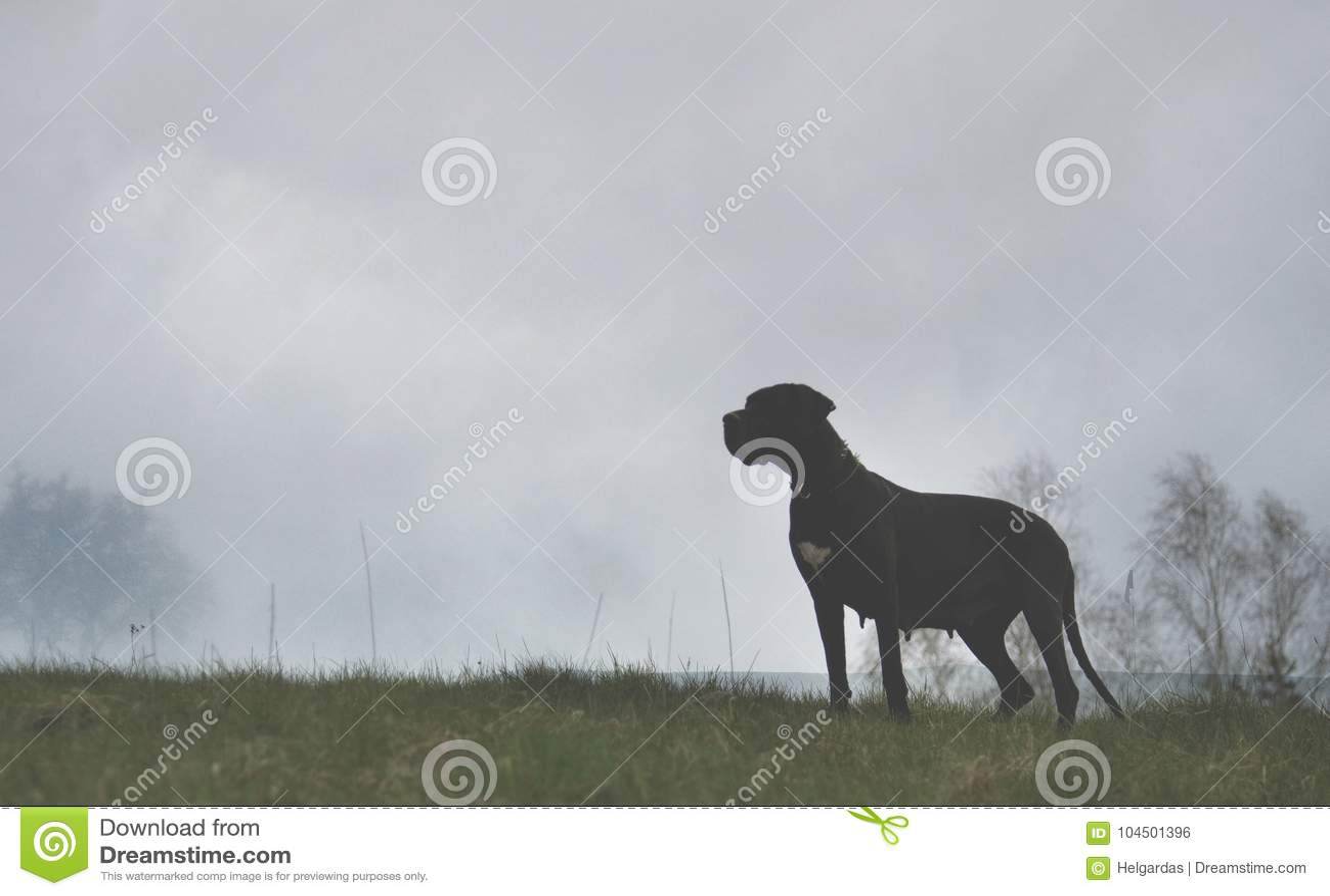 Download Dog on misty background stock photo. Image of mist, background - 104501396