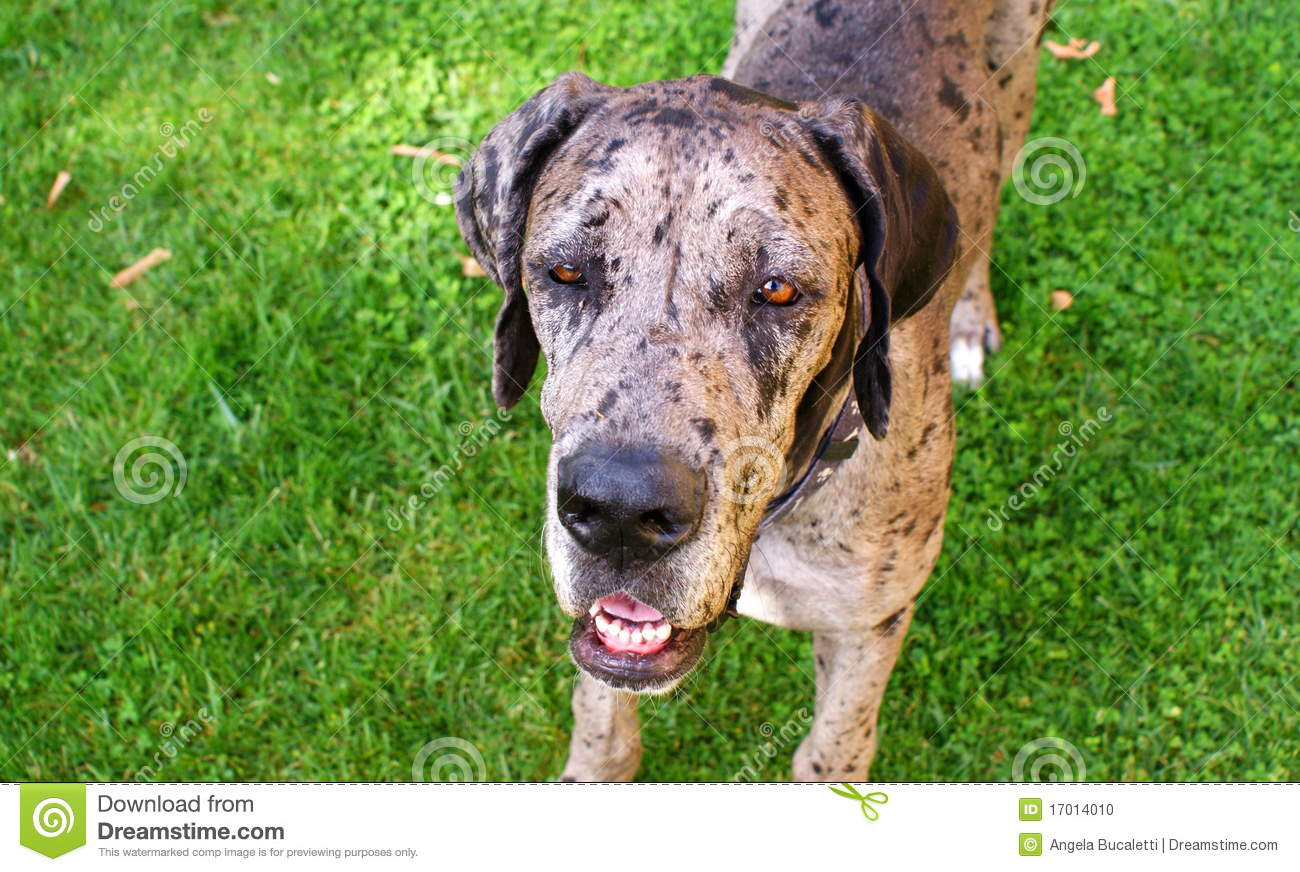 dog breeds all small dog breeds with pictures best selling dog breeds ...