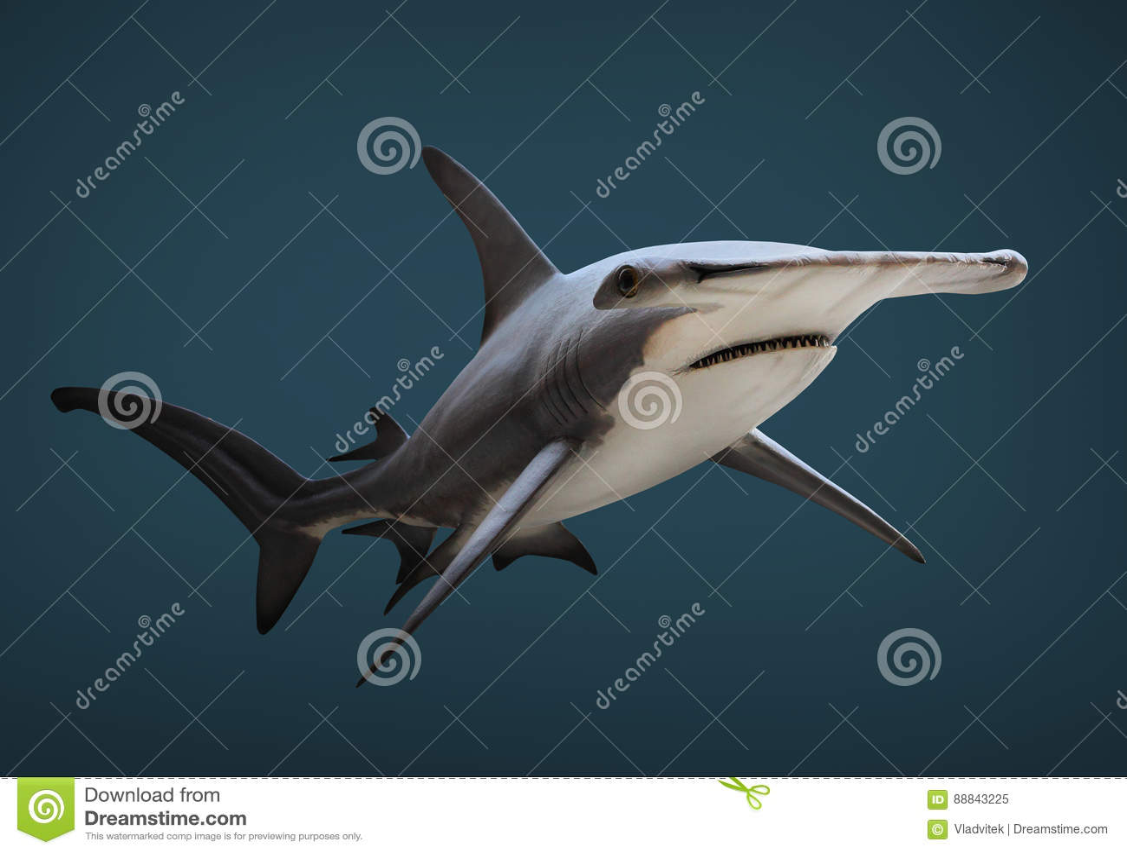 The Great Hammerhead Shark. Stock Image - Image of destination ...
