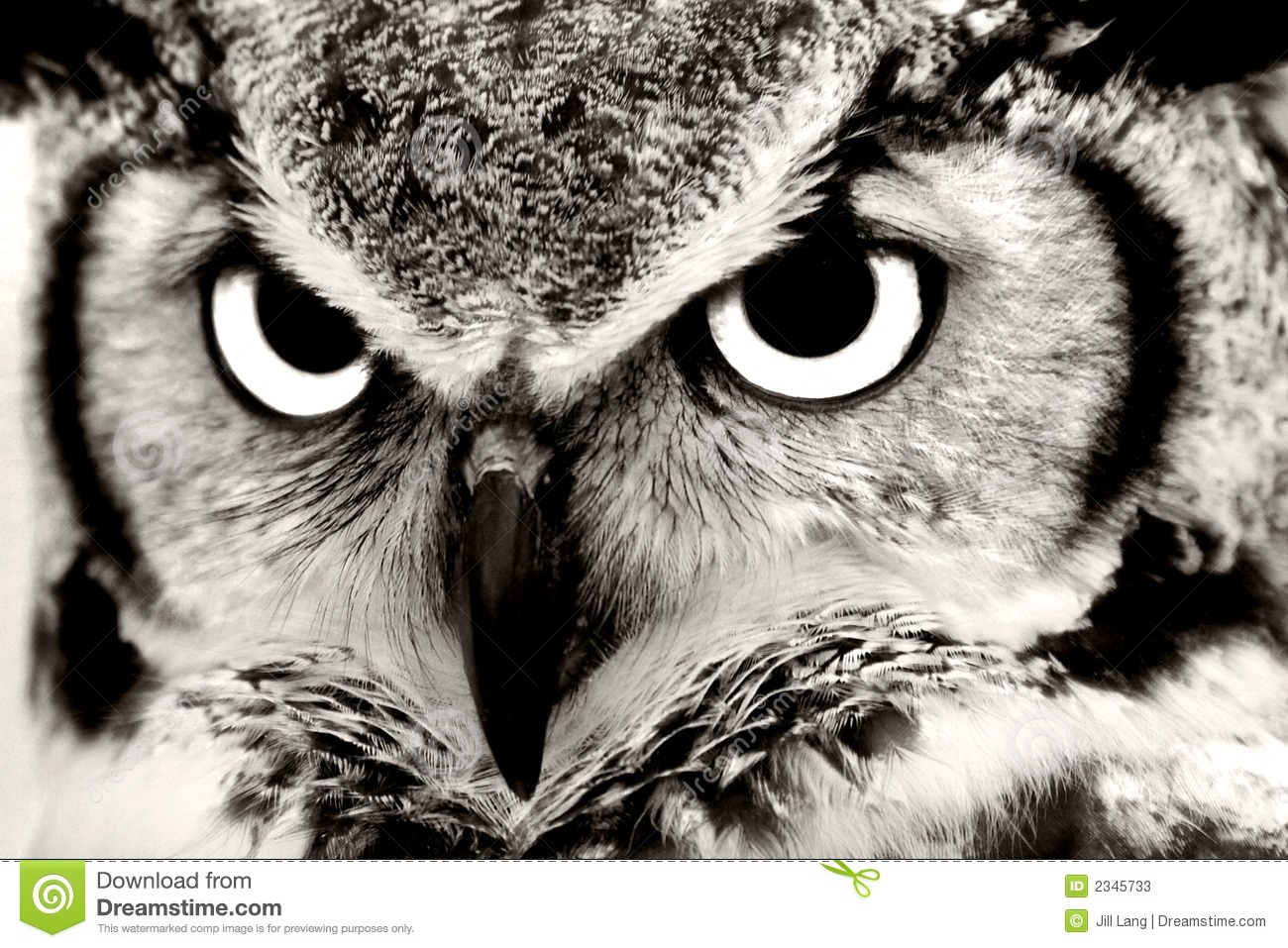 Black And White Photography Of Owls