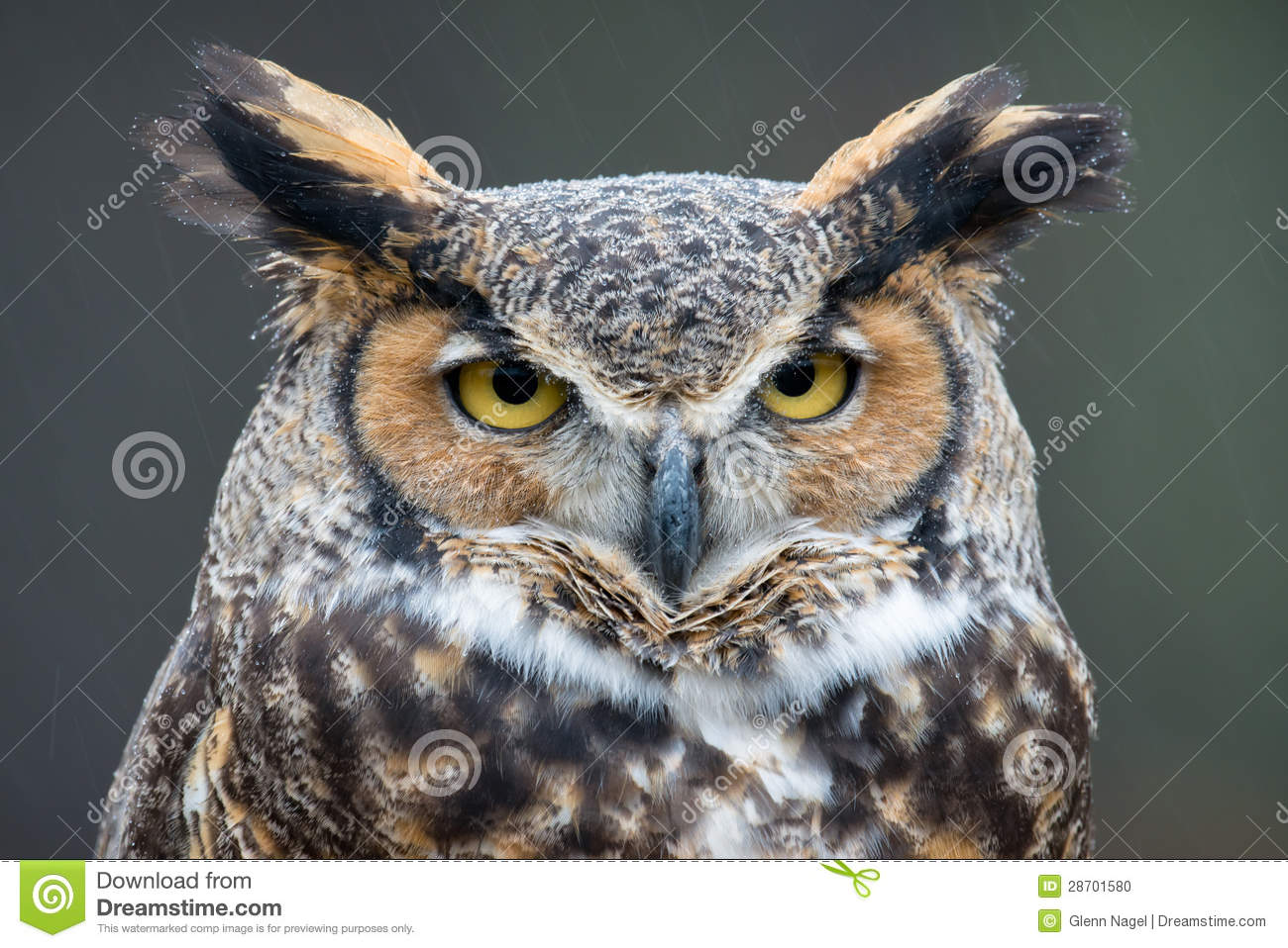 catholic singles in owls head Enjoy significant discounts with owlsheadcom coupon codes 2018 and discount offers get the hottest owl's head coupons at webbyplanetcom.