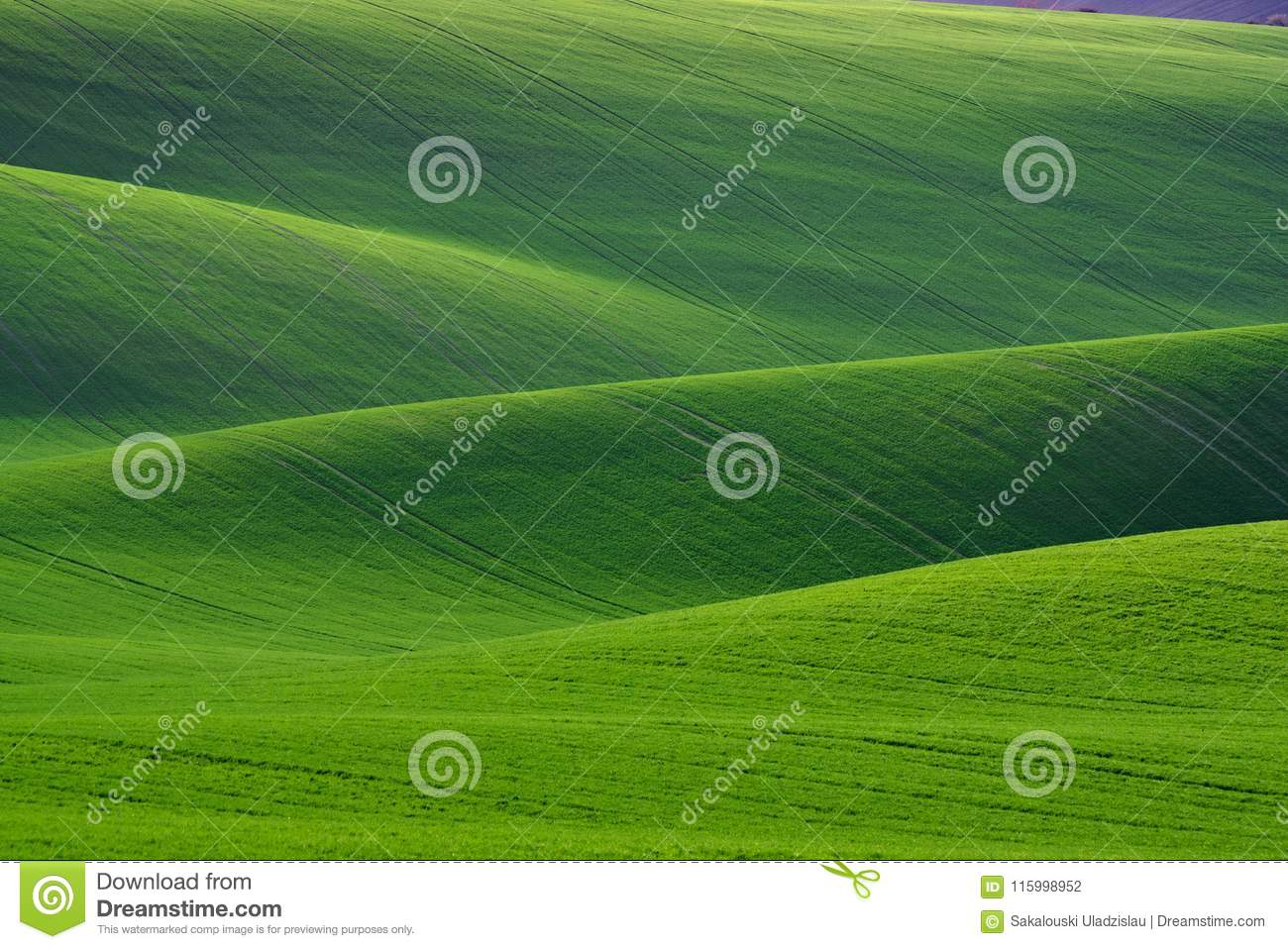 Great Natural Green Background. Spring Rolling Green Hills With Fields Of Wheat. Amazing Fairy Minimalistic Spring Landscape With