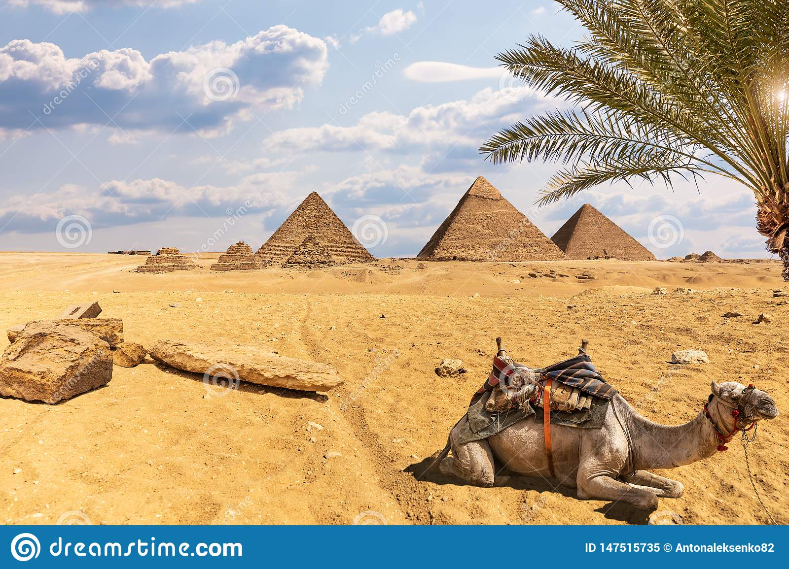 The Great Pyramids: Desert Of Giza Scenery With A Camel And