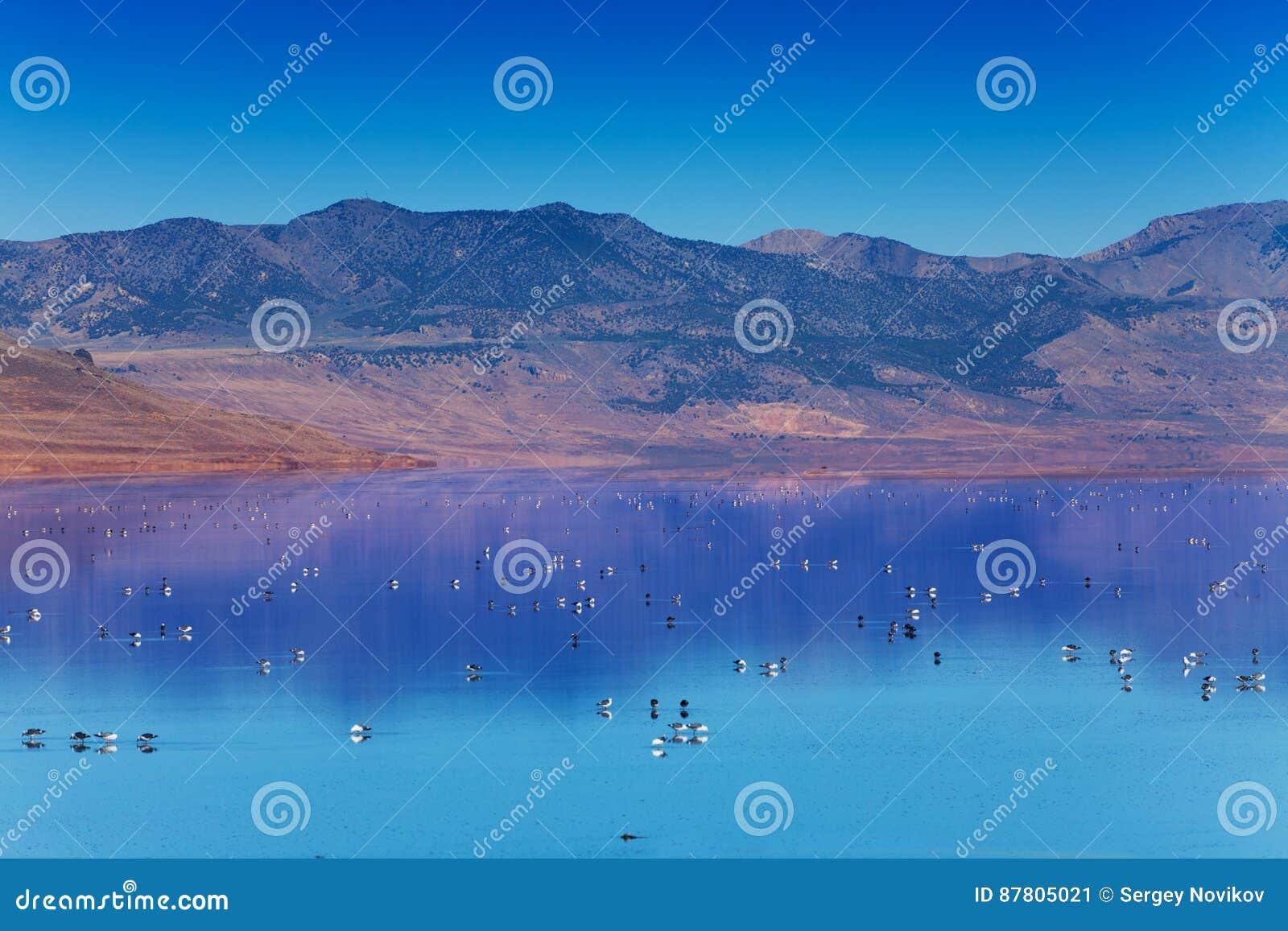 Great Salt Lake mit Schwimmen auf Oberflächenvögeln