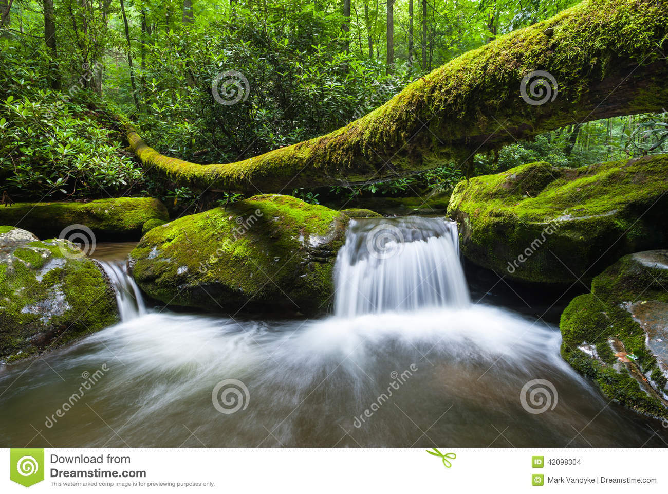 Great Smoky Mountains National Park Roaring Fork Motor
