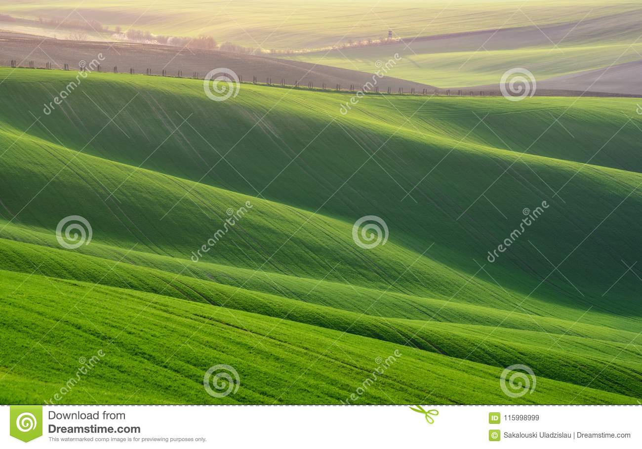 Great Summer Landscape With Fields Of Wheat. Natural Spring Rural Landscape In Green Color. Green Wheat Field With Stripes And W