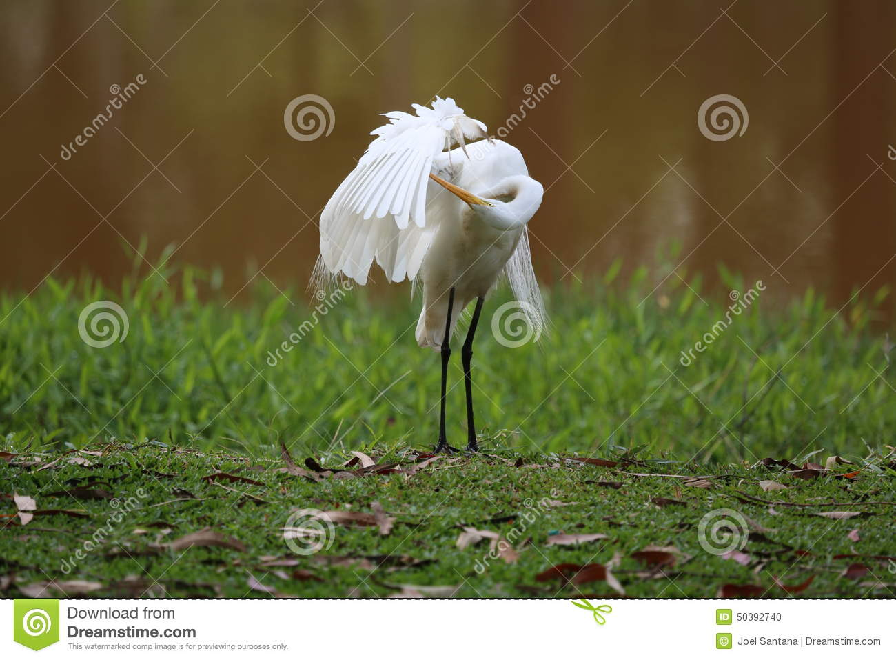Egret Cartoons: Baby Great White Heron Royalty-Free Stock Photo