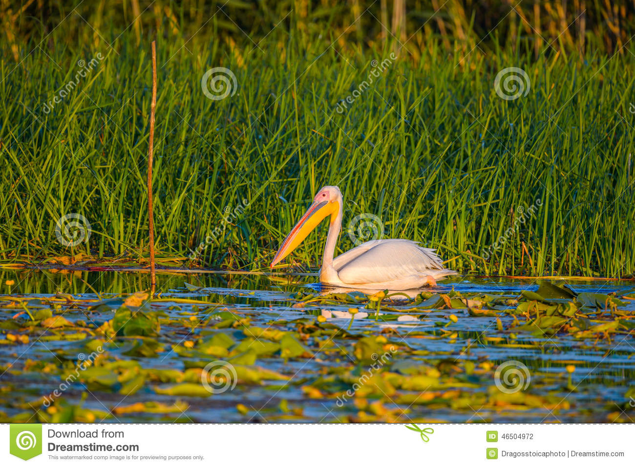 Image Result For Pelicanwater Com