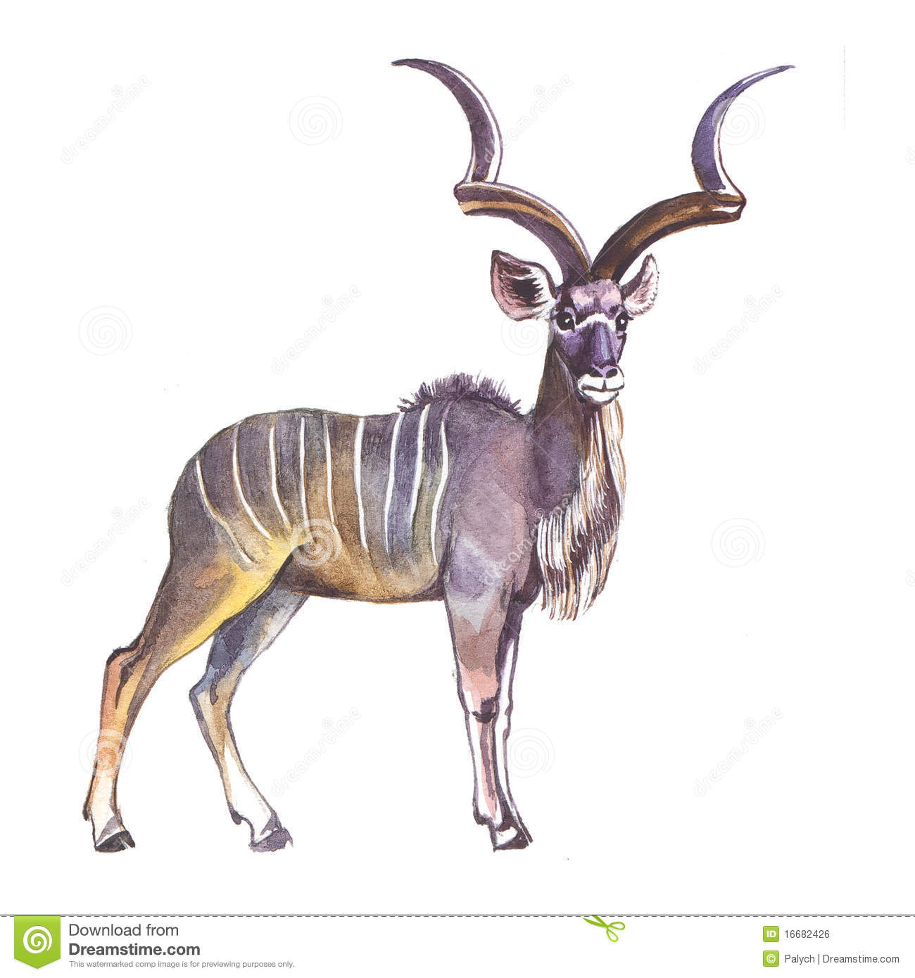 Greater Kudu Royalty Free Stock Image - Image: 16682426