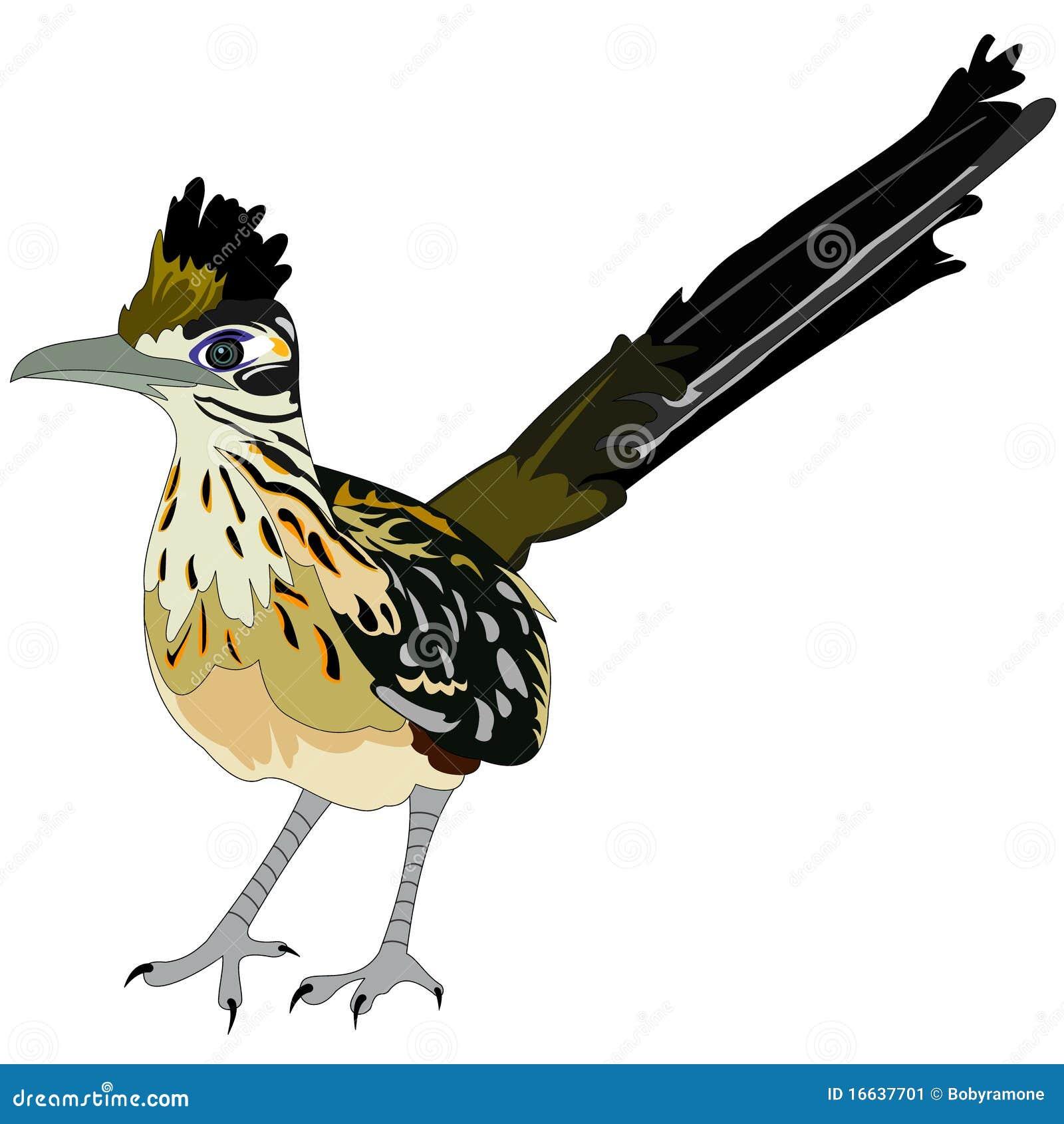 Greater Roadrunner Bird Stock Image - Image: 16637701