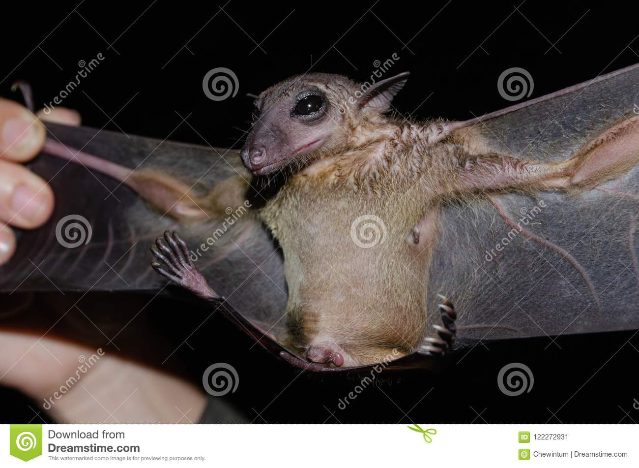 What does the bats dream about, and what to do