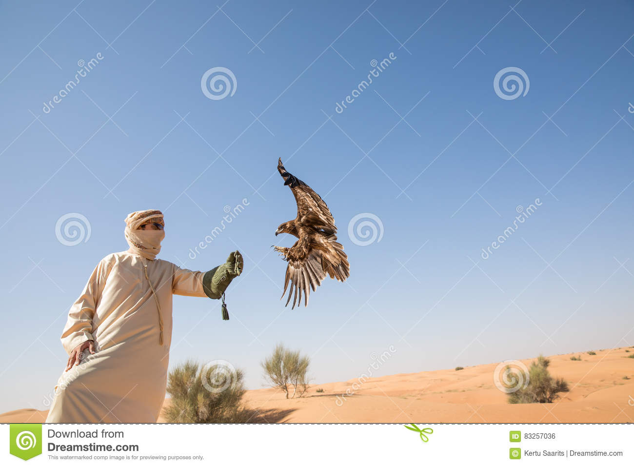 Greater Spotted Eagle During A Desert Falconry Show In Dubai, UAE