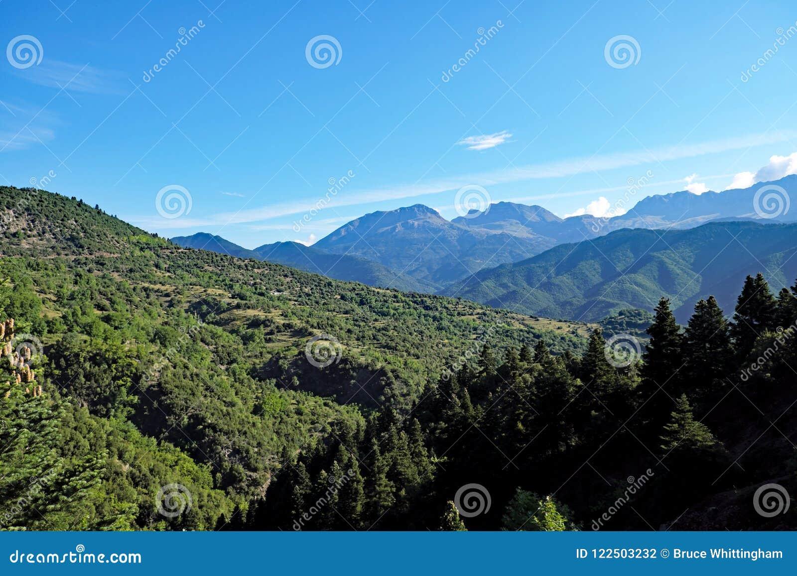 Greccy Halnej sosny lasy, Grecja